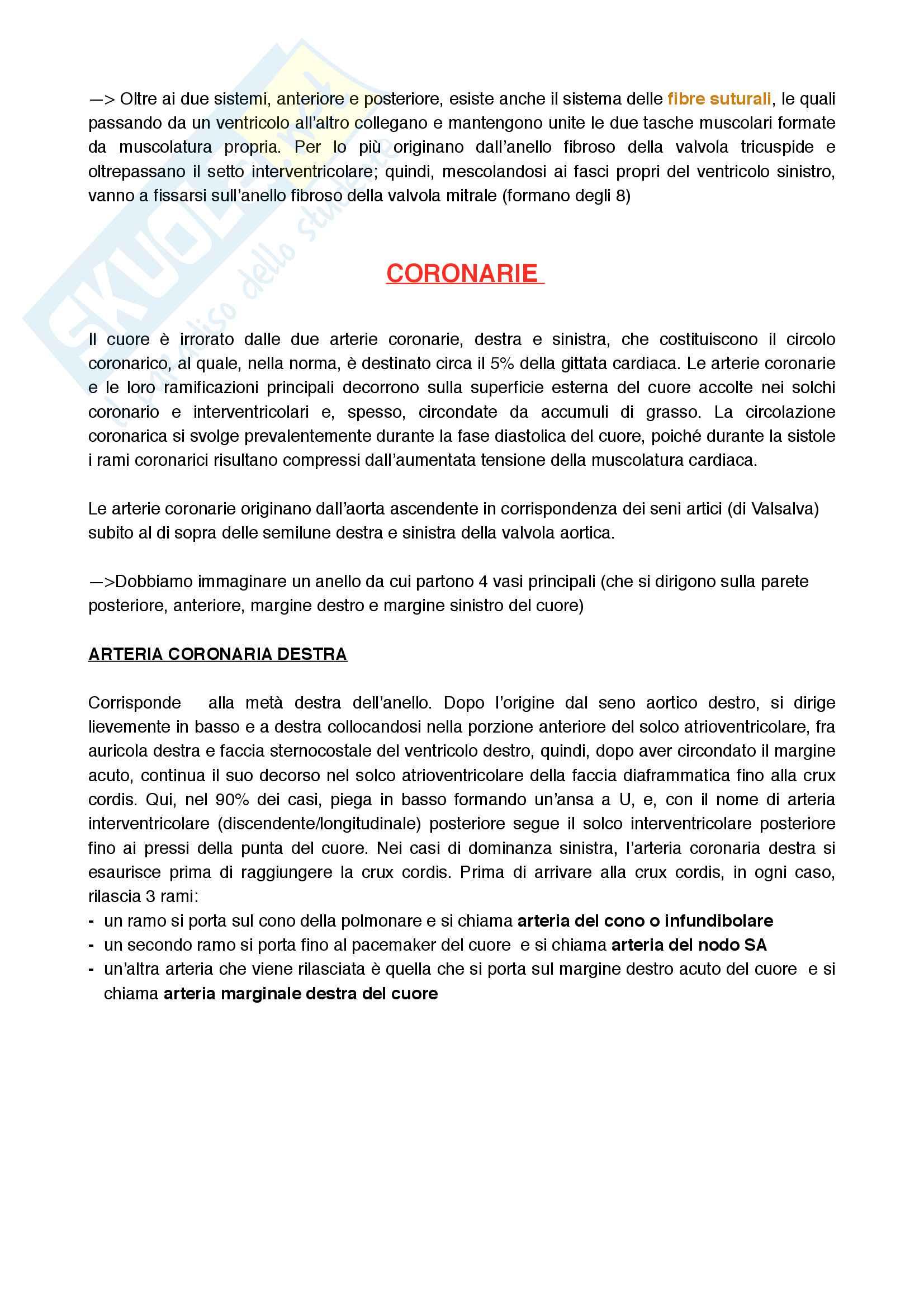 Cuore, sistema di conduzione e sua circolazione Pag. 21