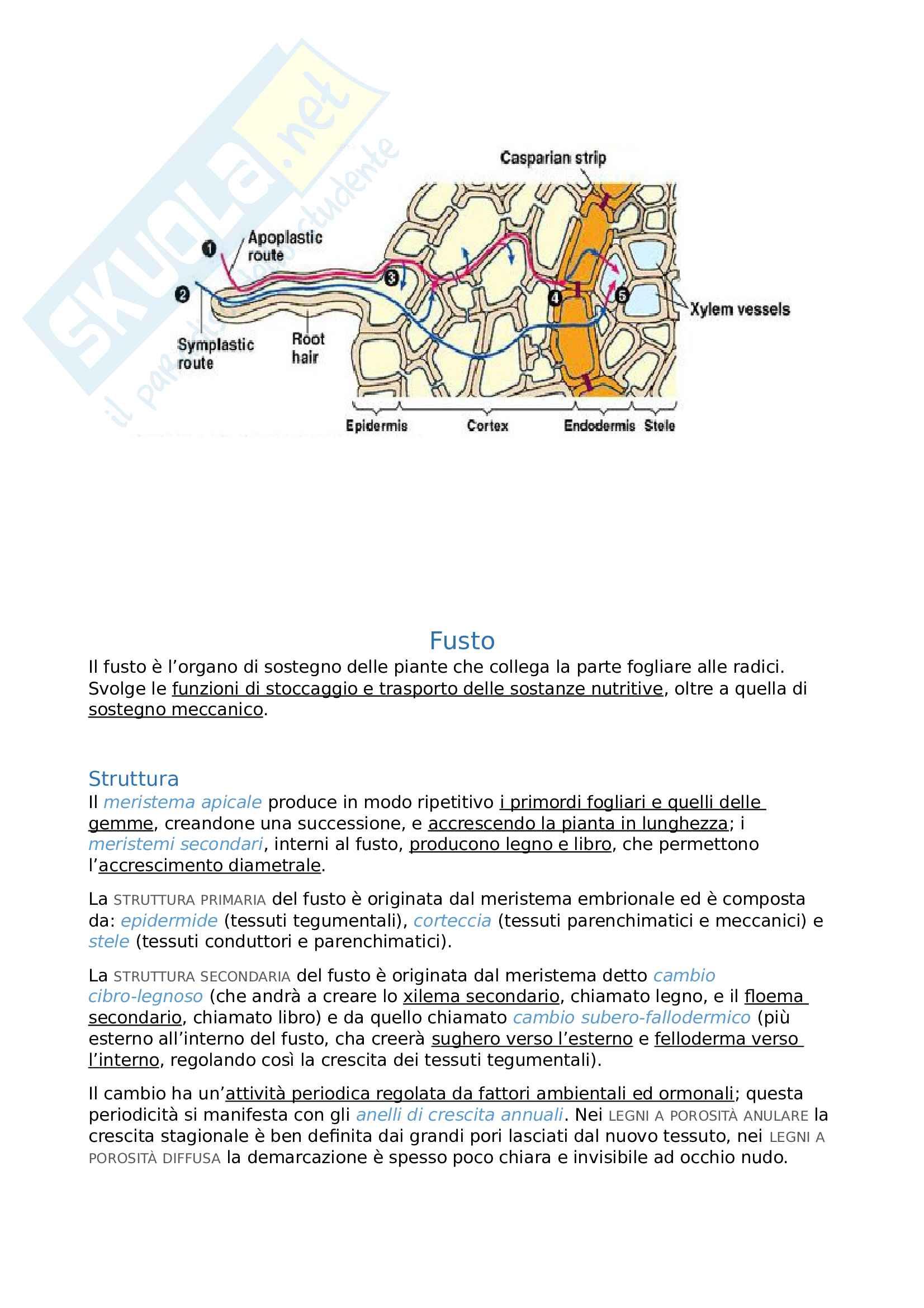 Riassunto esame Biologia Vegetale Pag. 16