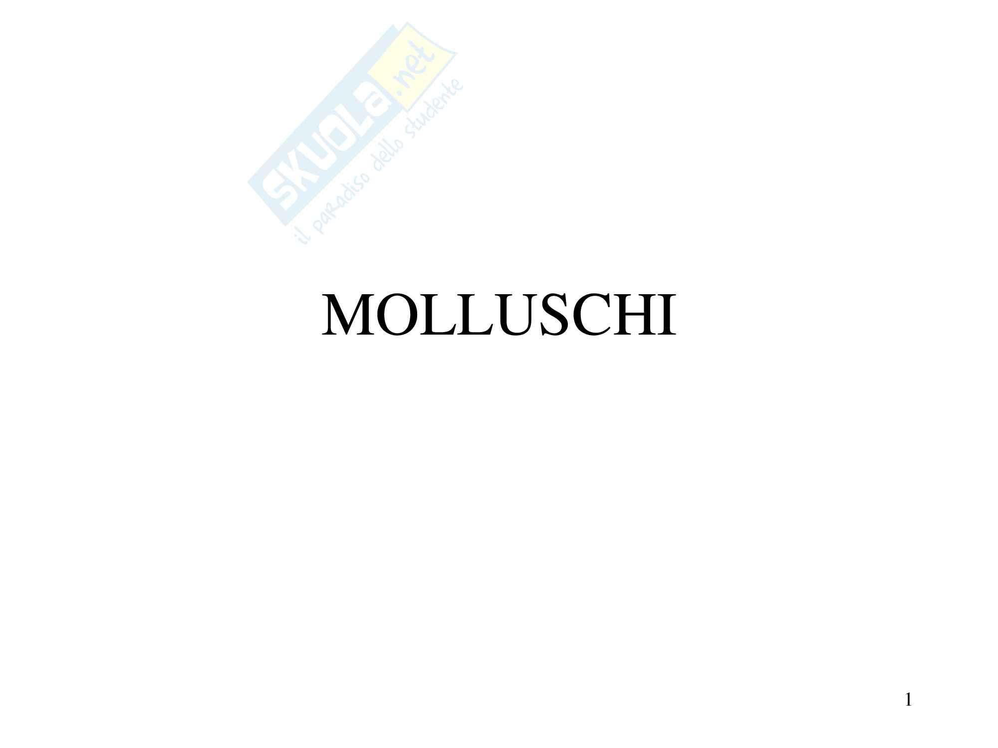 Molluschi, zoologia, scienze biologiche