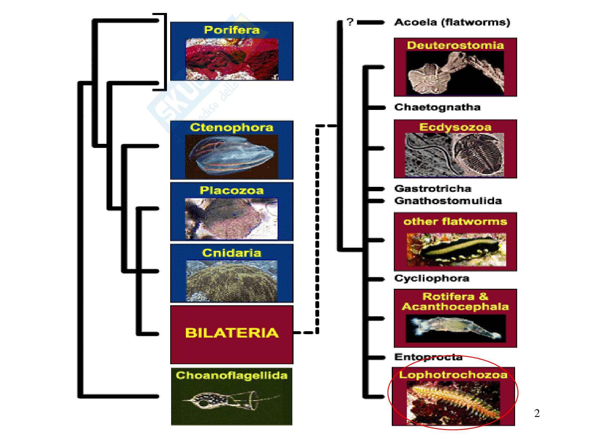 Molluschi, zoologia, scienze biologiche Pag. 2