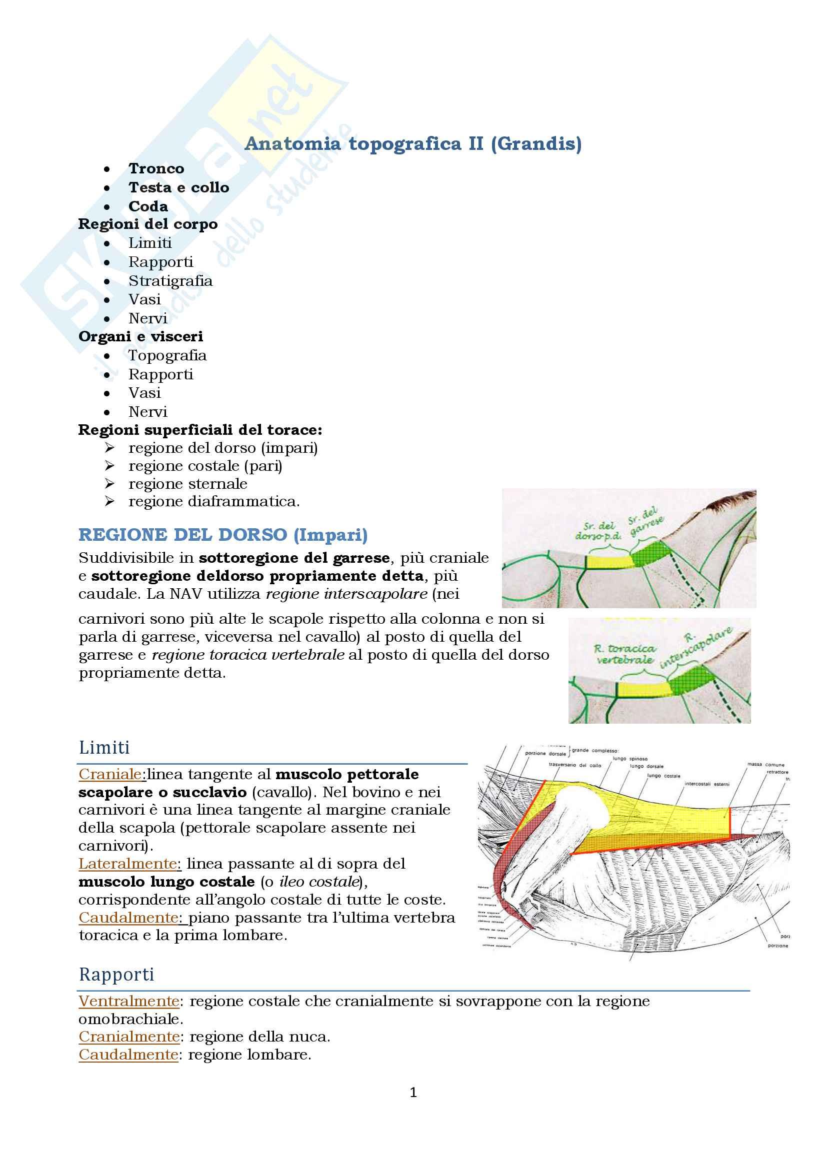 Anatomia topografica veterinaria parte II (piccoli e grandi animali)