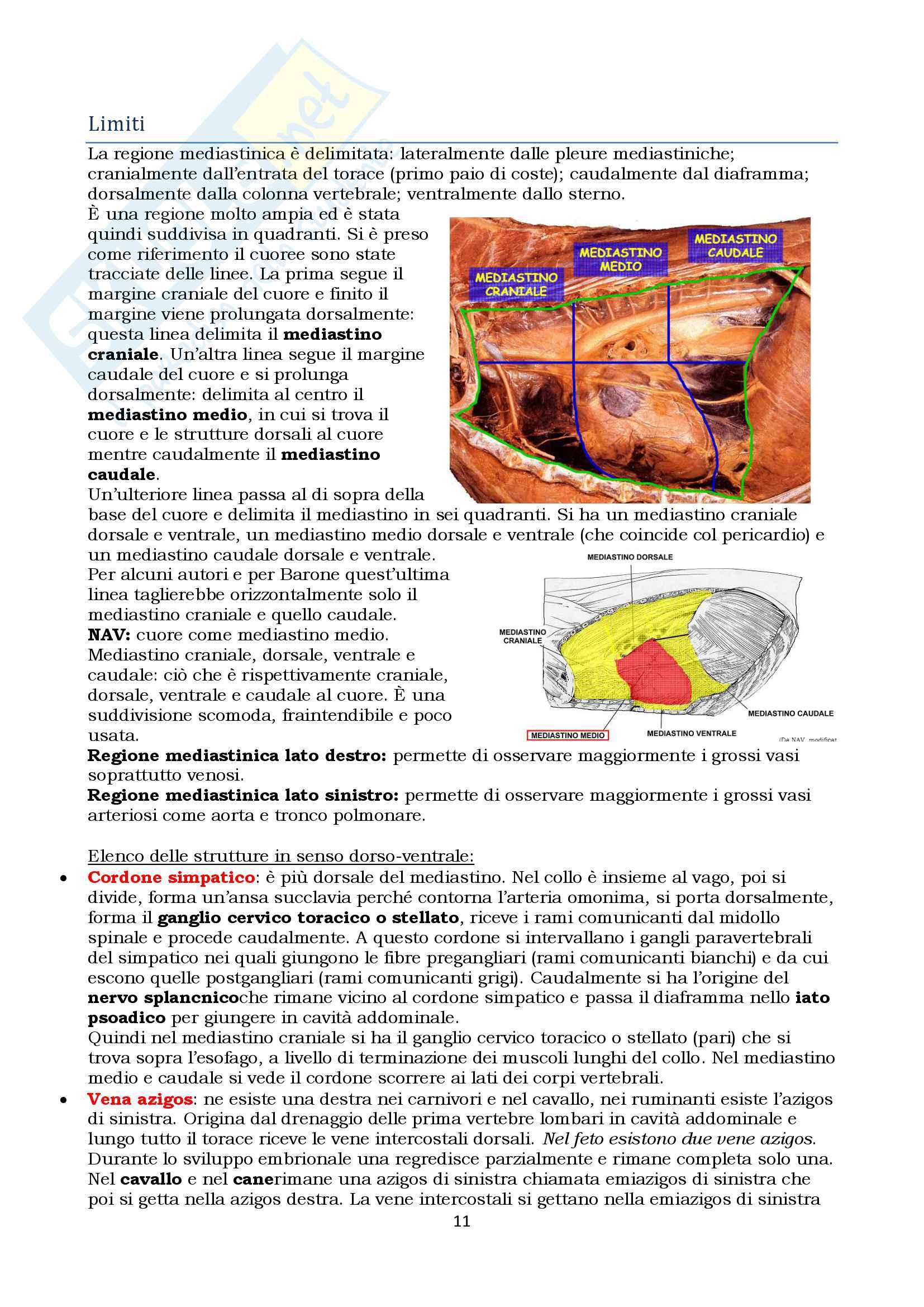 Anatomia topografica veterinaria parte II (piccoli e grandi animali) Pag. 11