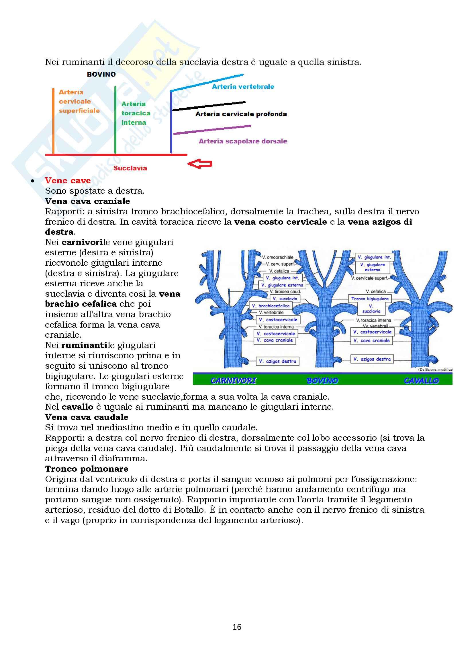 Anatomia topografica veterinaria parte II (piccoli e grandi animali) Pag. 16