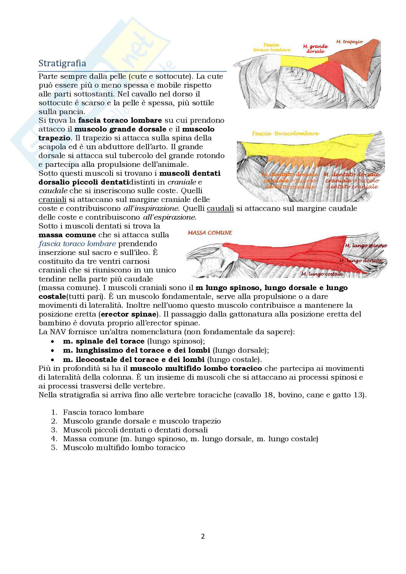 Anatomia topografica veterinaria parte II (piccoli e grandi animali) Pag. 2