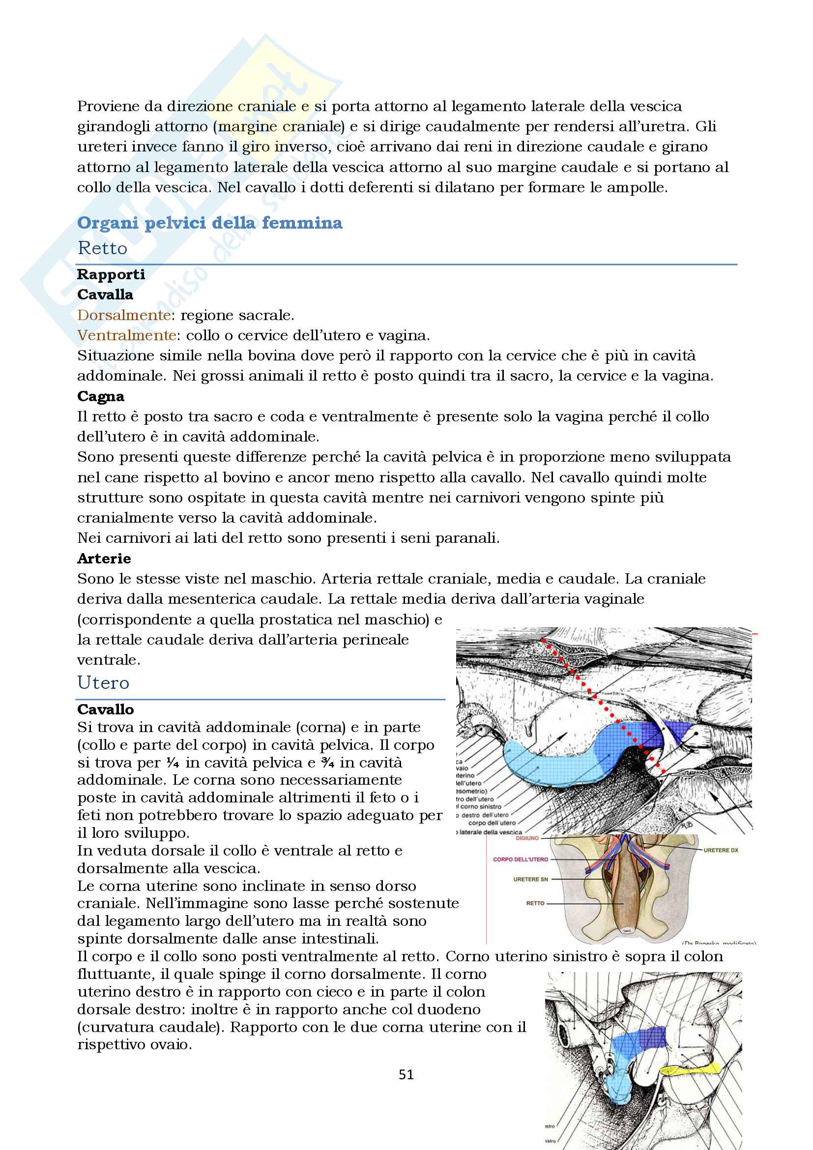 Anatomia topografica veterinaria parte II (piccoli e grandi animali) Pag. 51