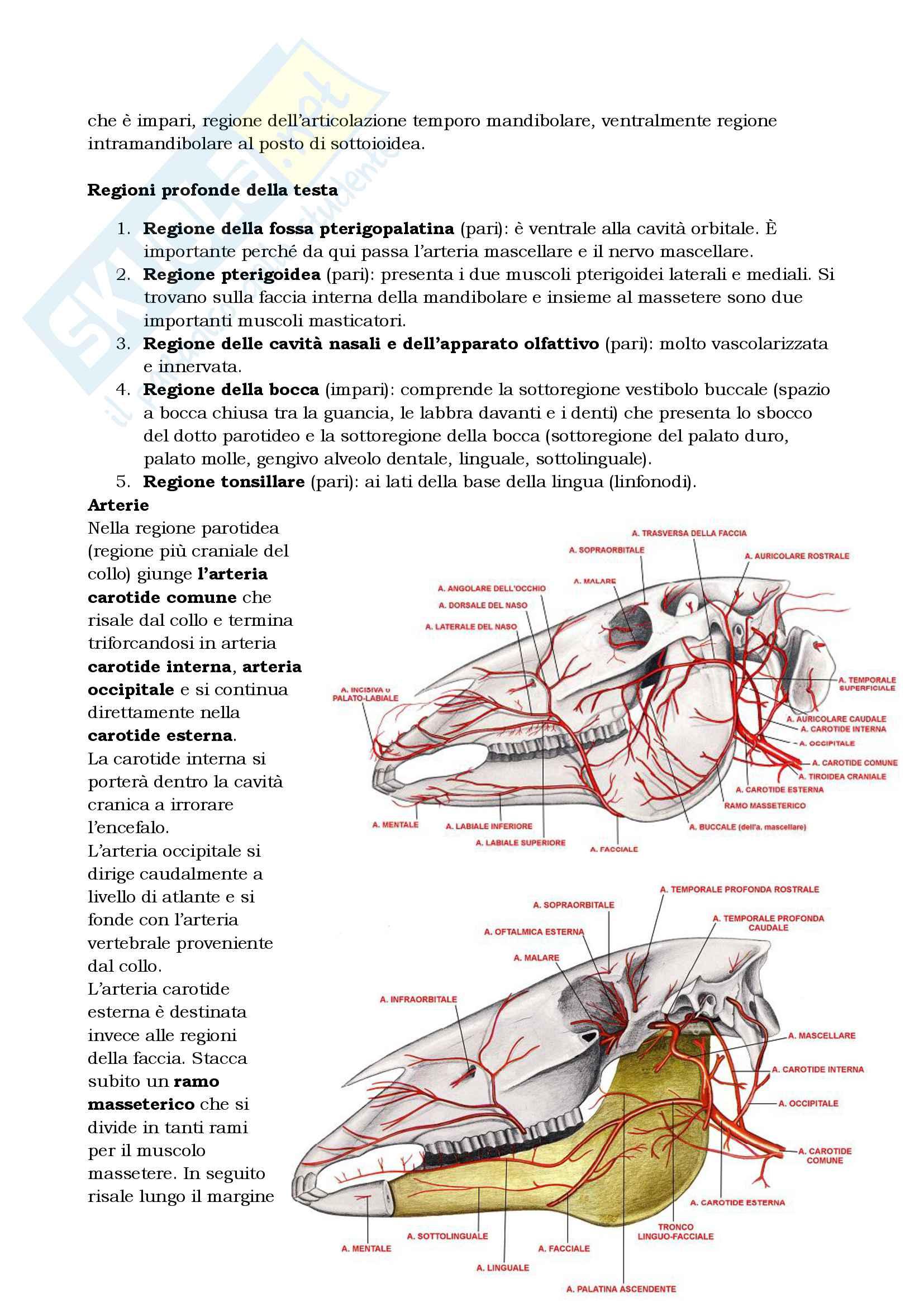 Anatomia topografica veterinaria parte II (piccoli e grandi animali) Pag. 56