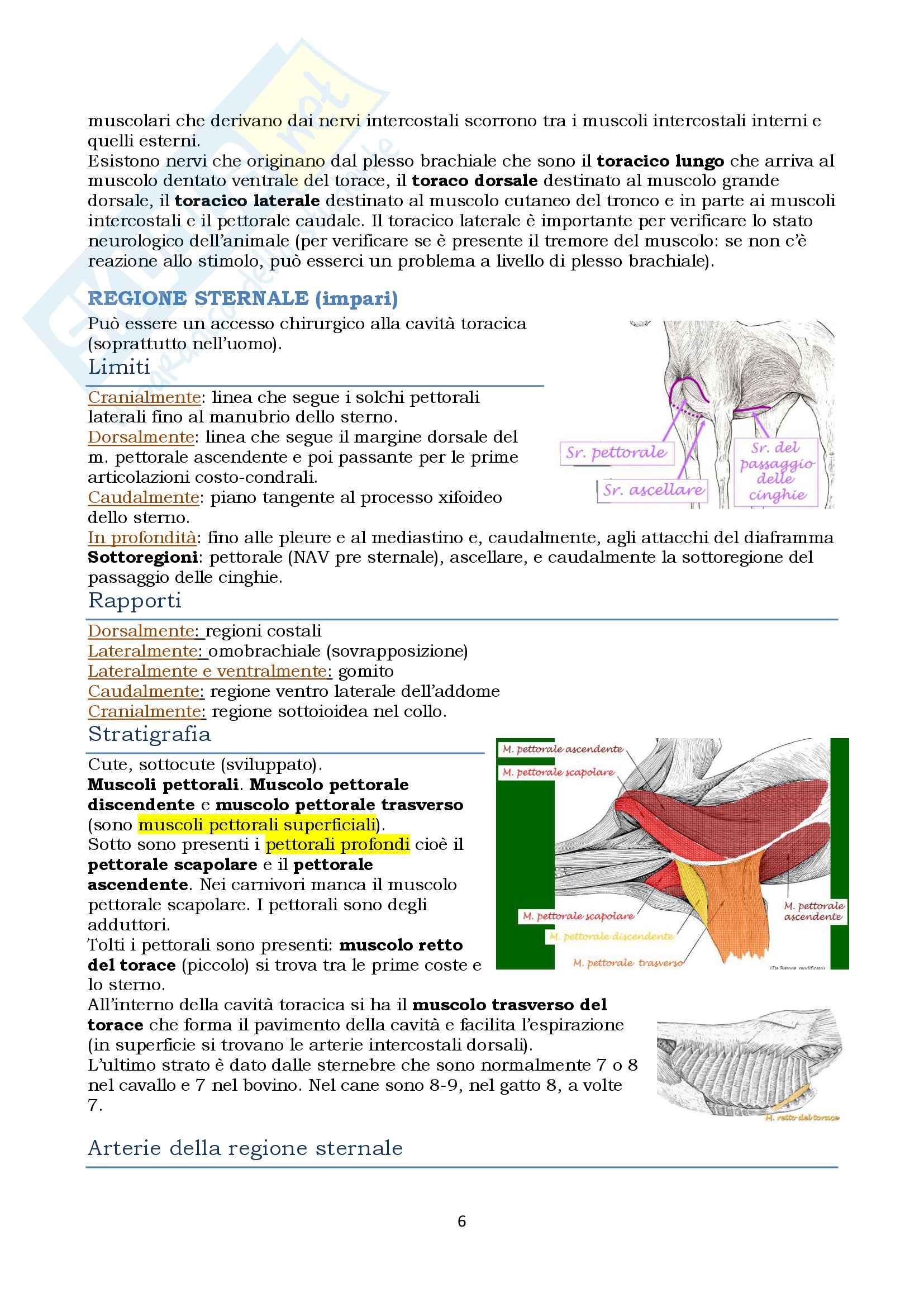 Anatomia topografica veterinaria parte II (piccoli e grandi animali) Pag. 6