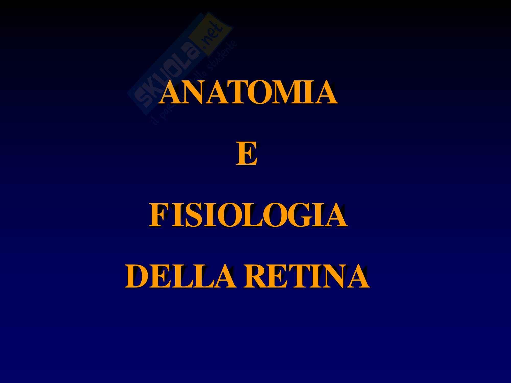Retina - Anatomia e Fisiologia