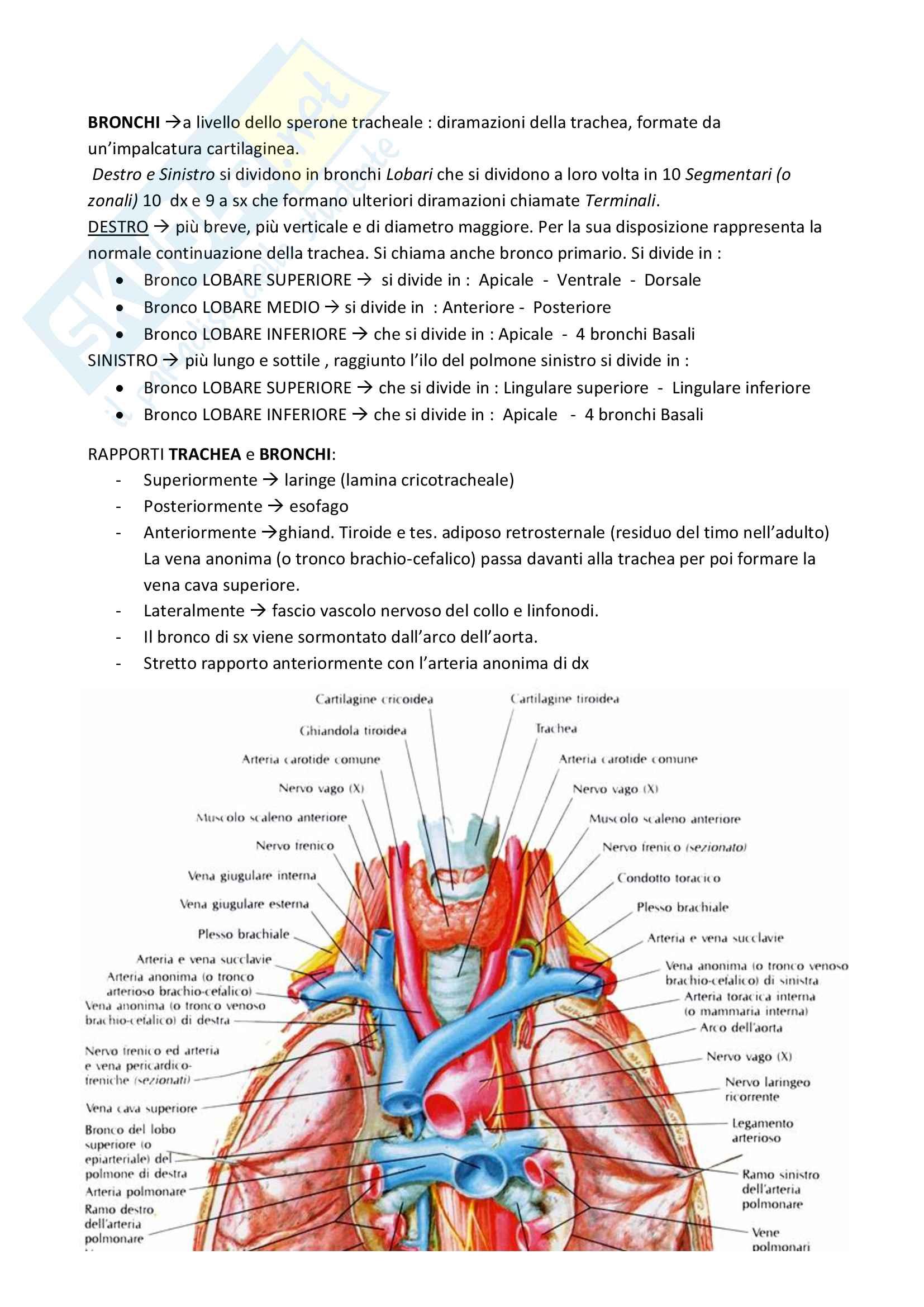 Circolatorio, cuore e polmoni Pag. 21
