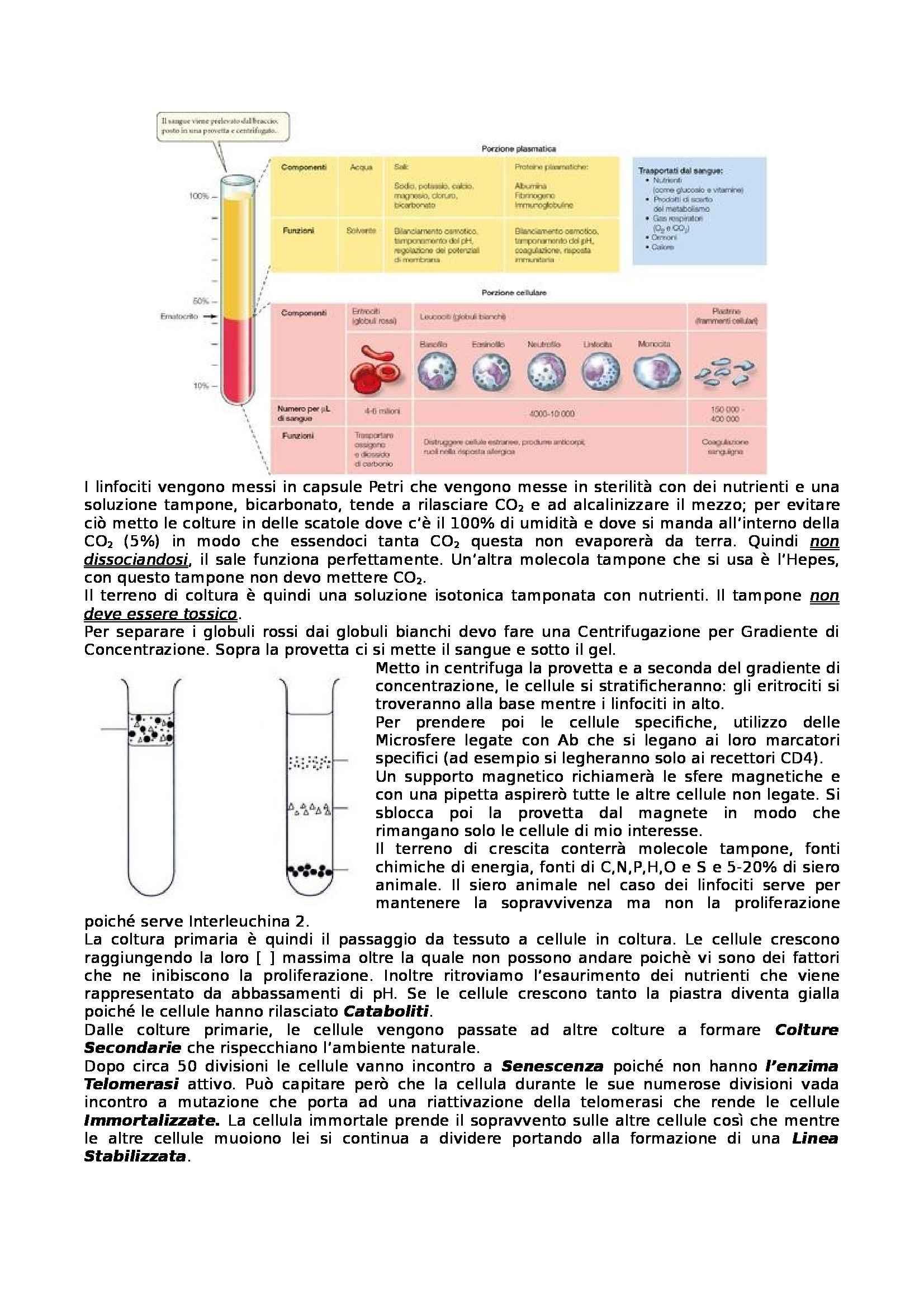 Riassunto esame Virologia, prof. Affabris, libro consigliato Basic Virology di Hewlett e Wagner Pag. 6