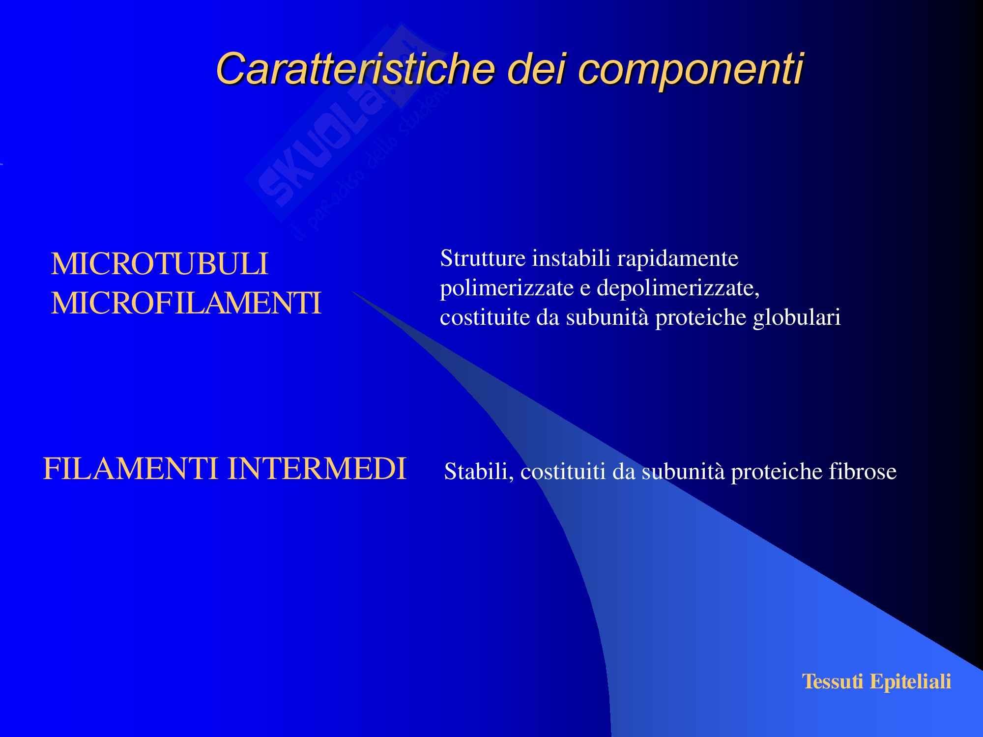 Tessuti Epiteliali Pag. 11