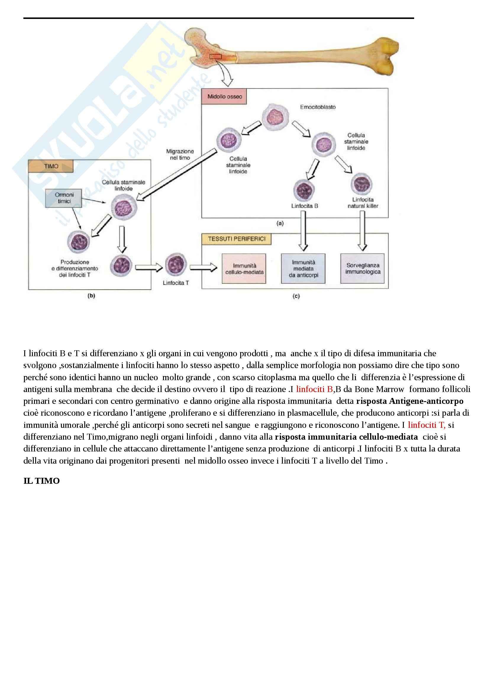 Sistema linfatico Pag. 6