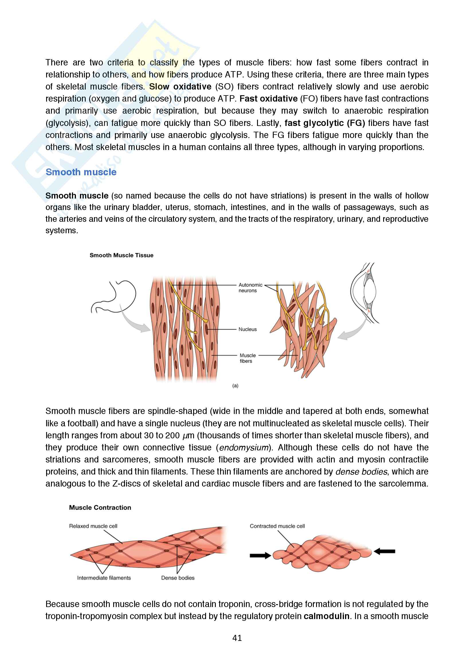 Appunti di Fisiologia (Human physiology, ENG) Pag. 41