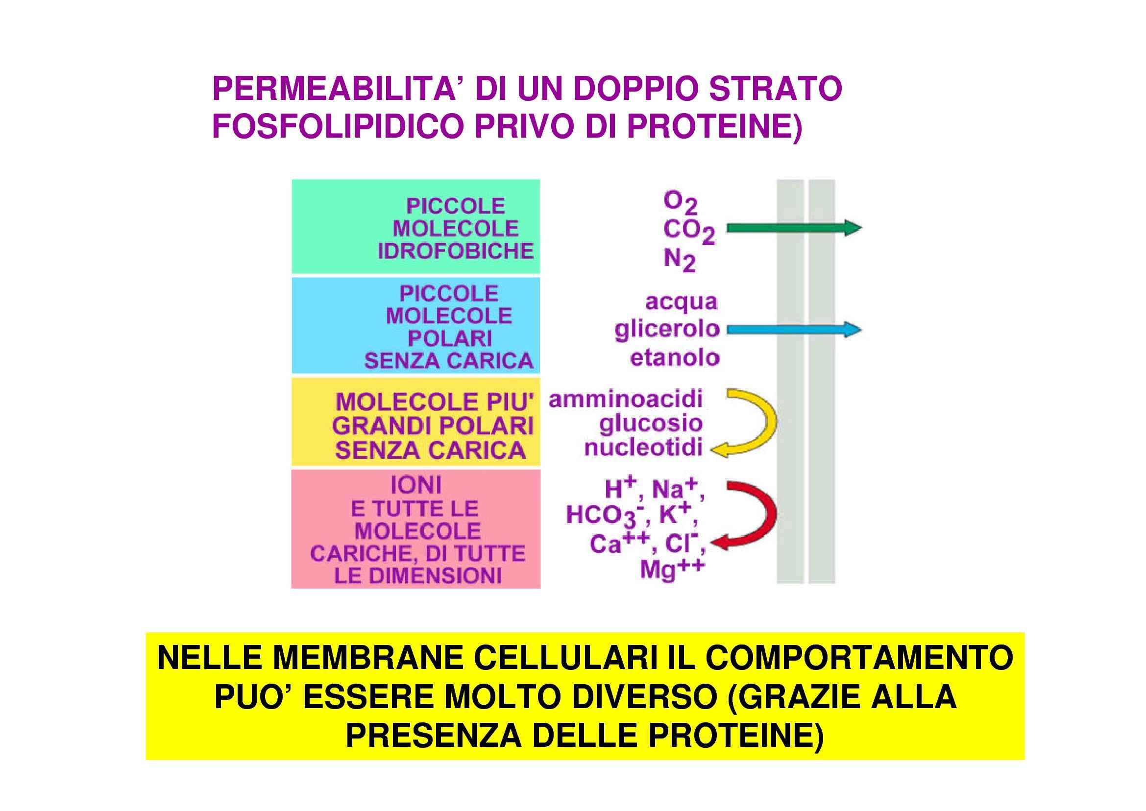 Trasporto transmembrana - Canali ionici