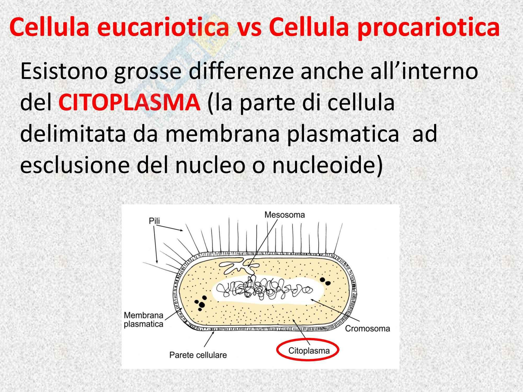 Biologia vegetale - la cellula vegetale Pag. 11