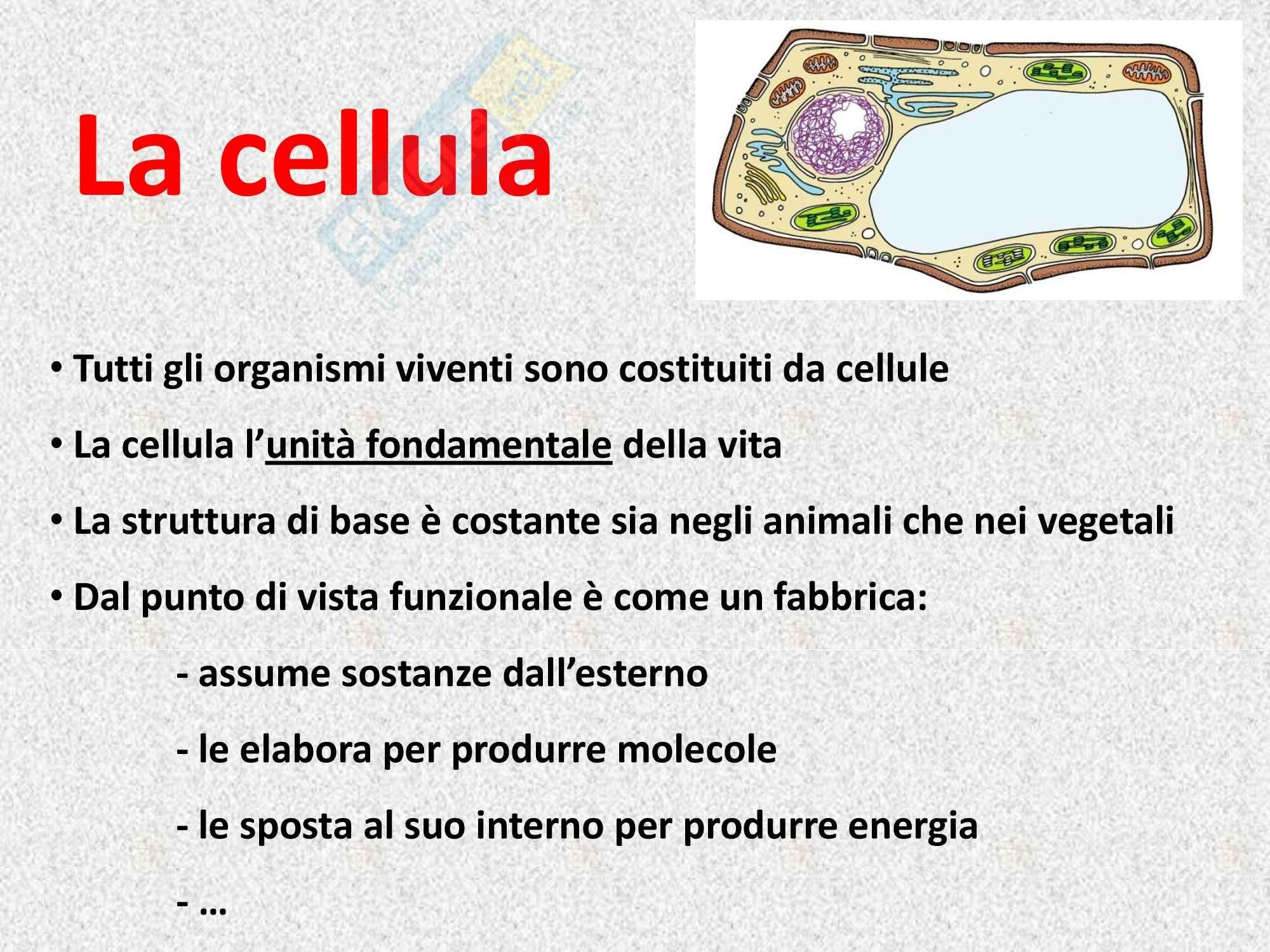 Biologia vegetale - la cellula vegetale Pag. 2