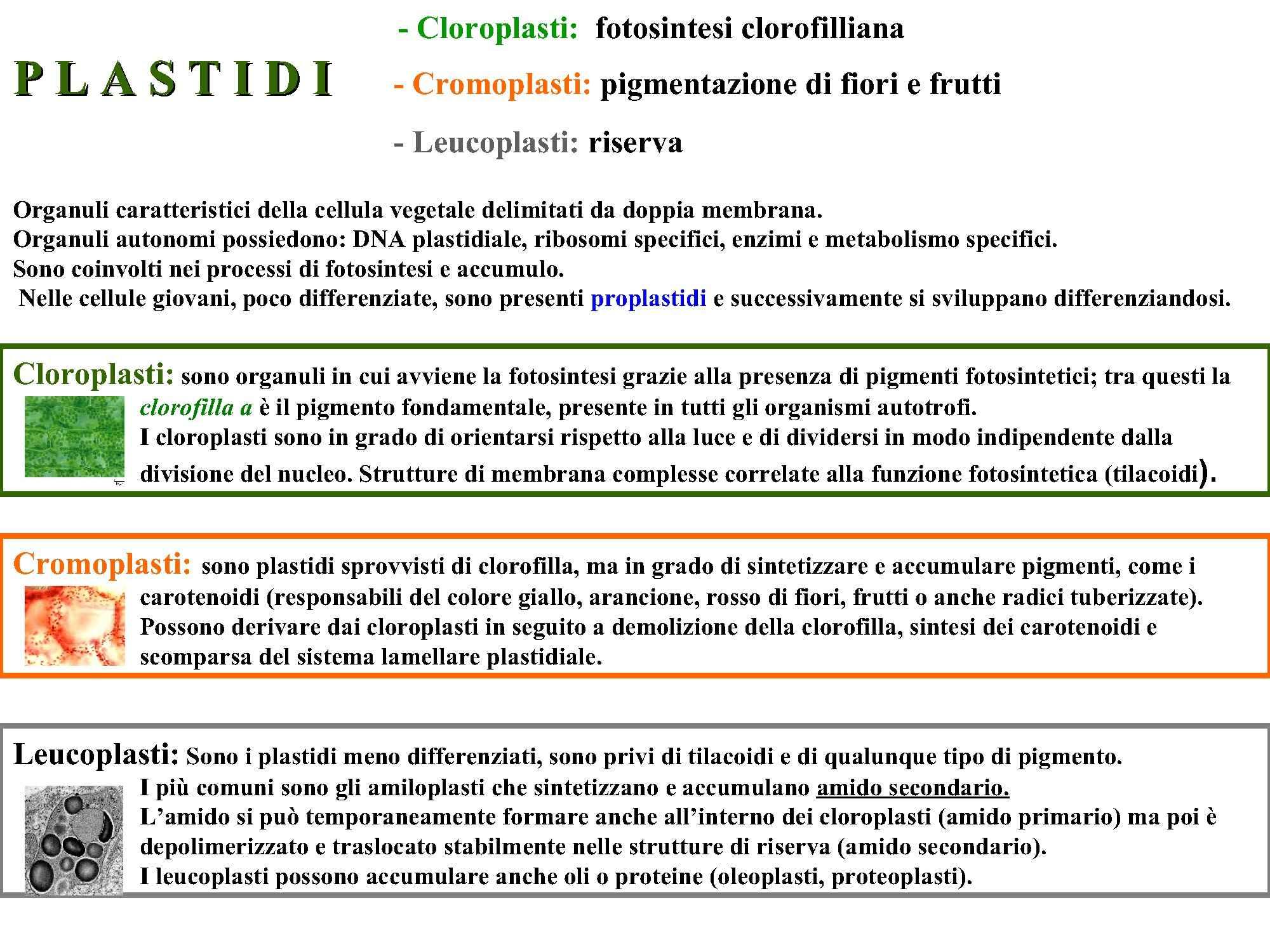 dispensa A. Guerrini Biologia Vegetale e Farmacognasia