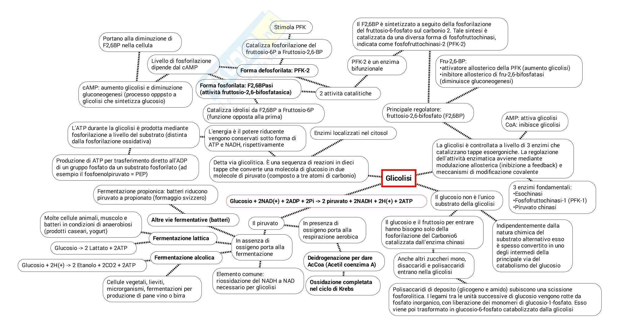 Schema su Glicolisi metabolismo e fermentazione pdf