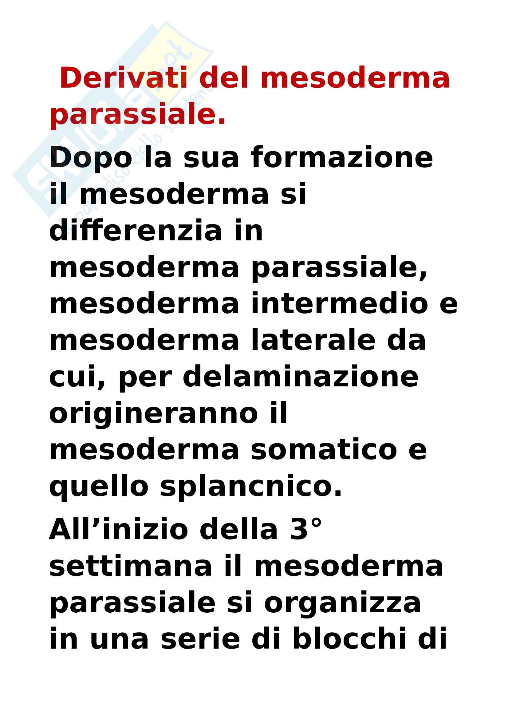 Derivati del mesoderma parassiale