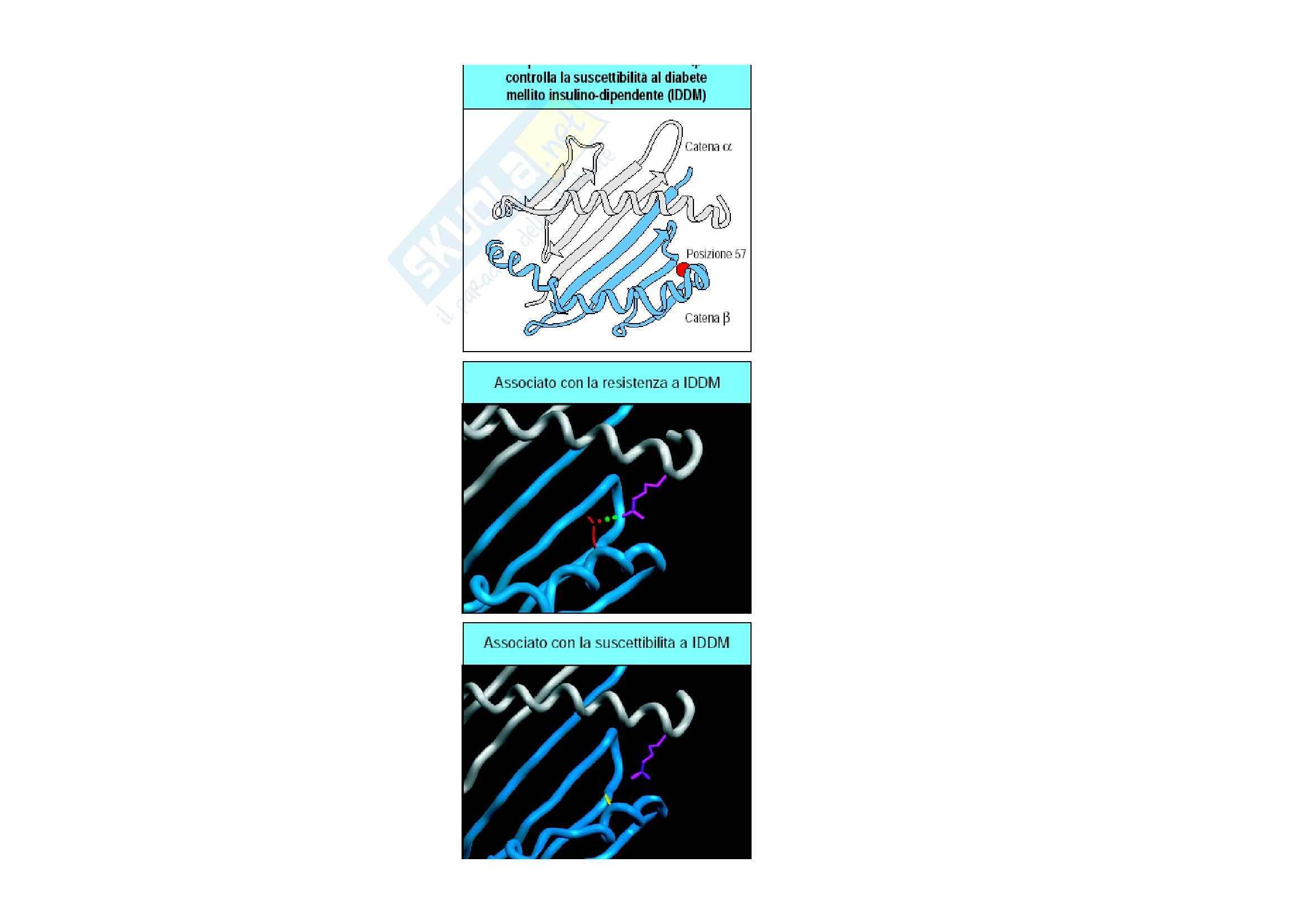 Immunologia - suscettibilità alle malattie autoimmuni Pag. 21
