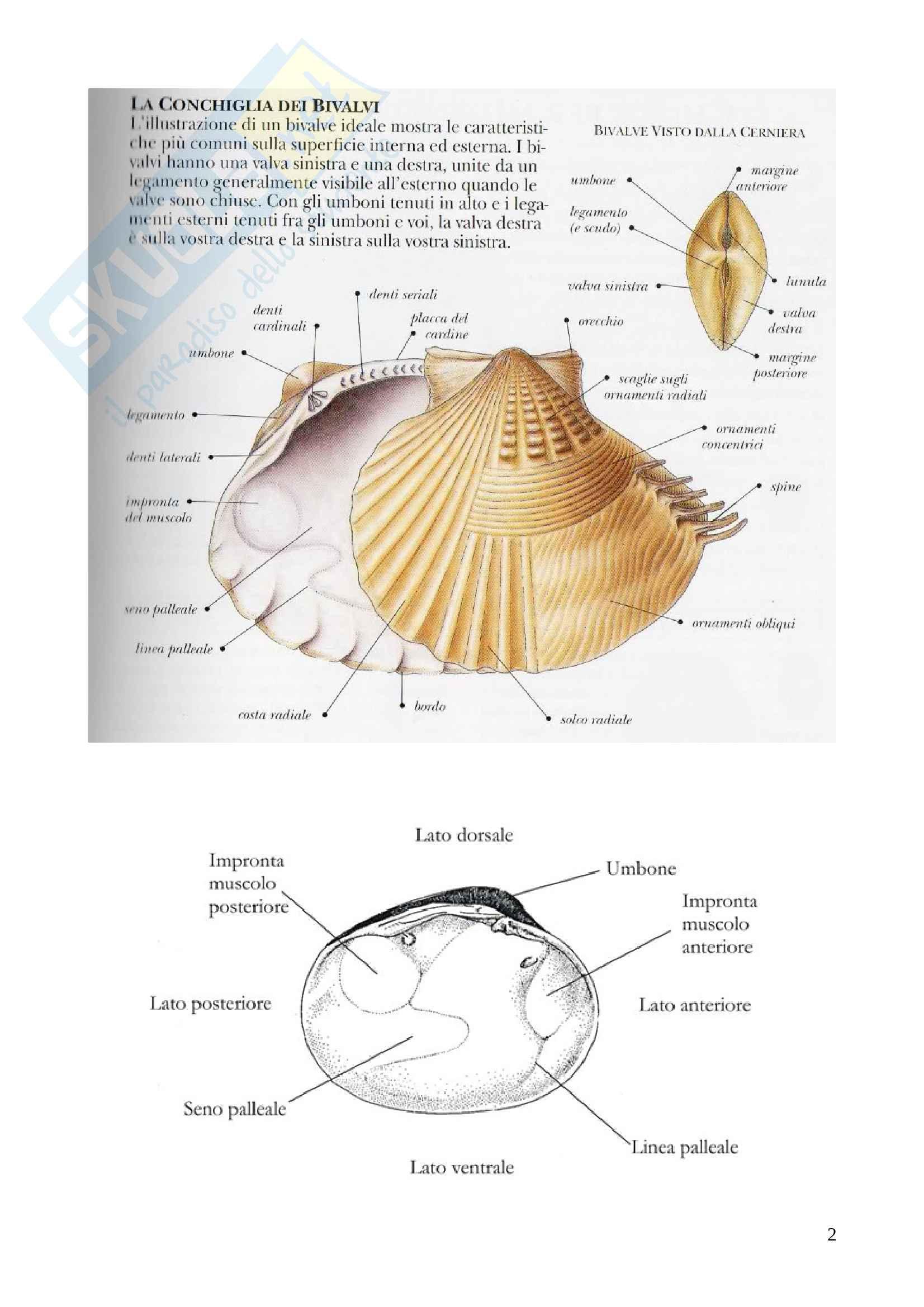 Appunti di Paleontologia Sistematica (Invertebrati) Pag. 2