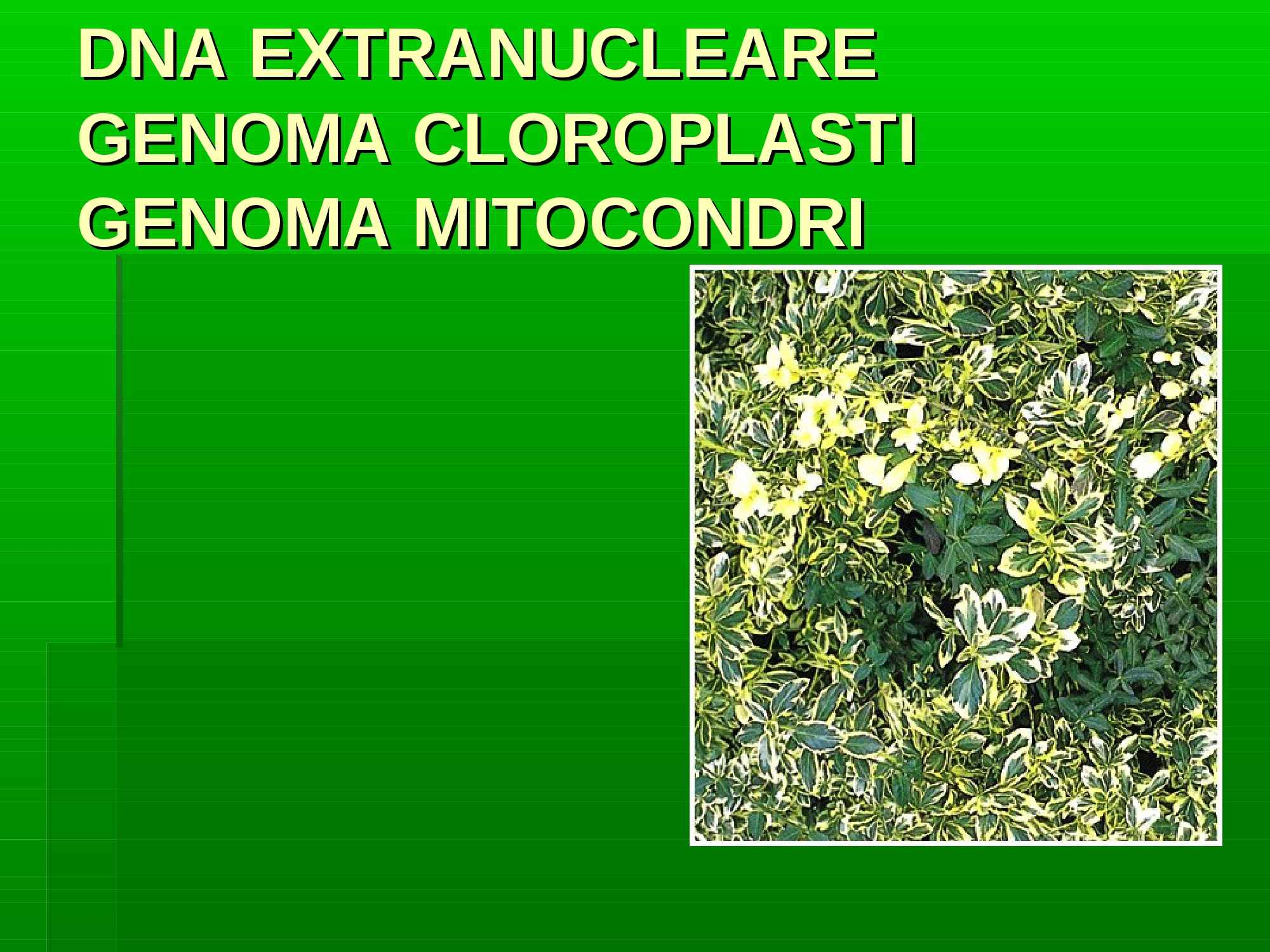 DNA extranucleare - Mitocondri e cloroplasti