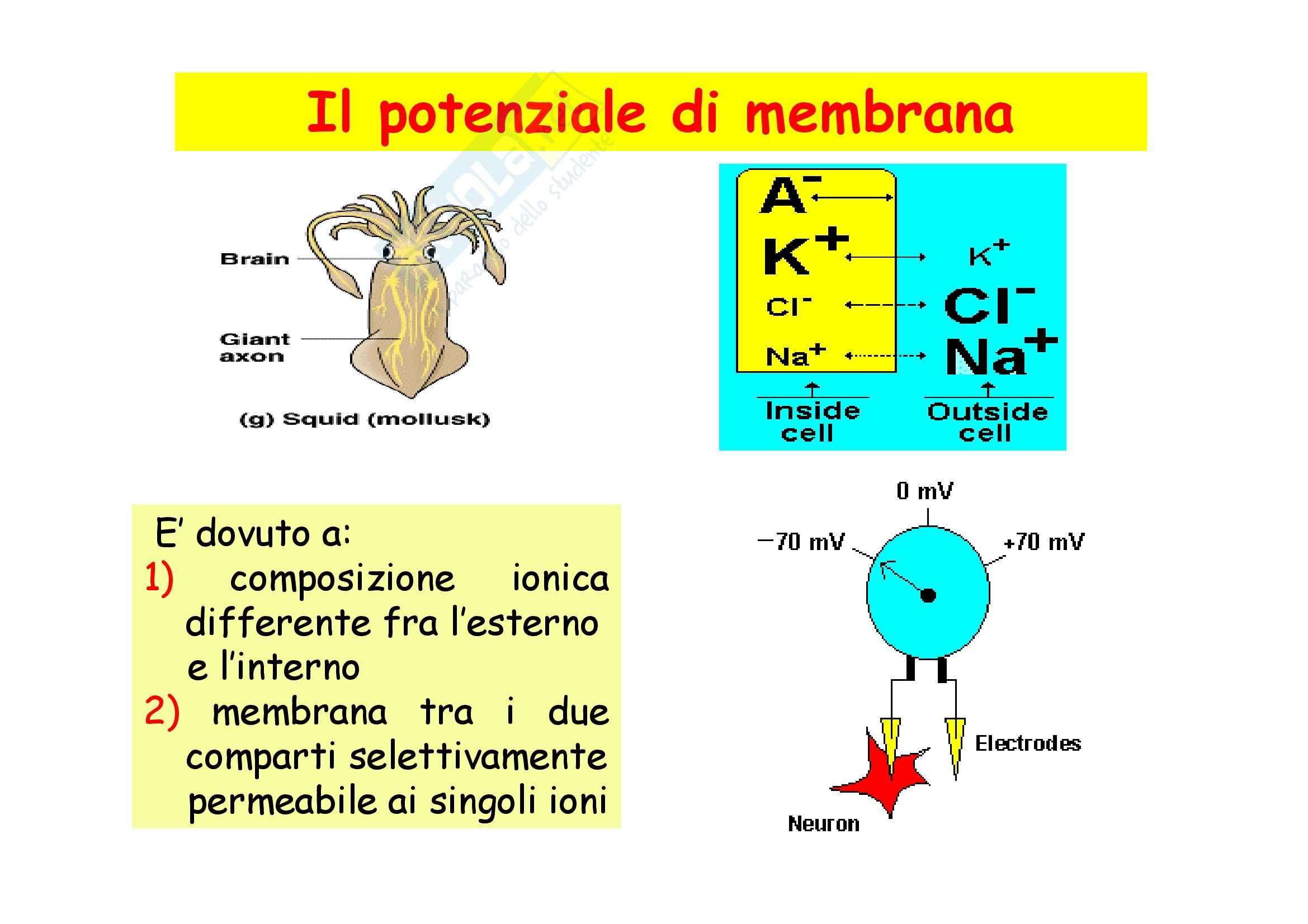 Fisiologia - fenomeni elettrici che interessano la cellula Pag. 2