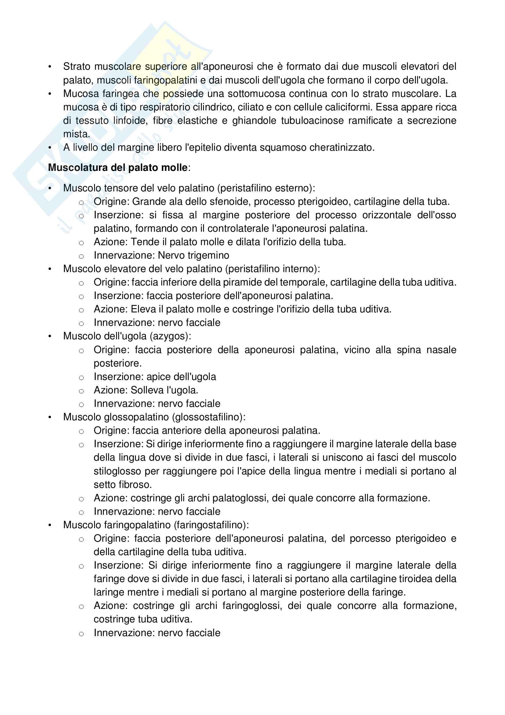 1 anatomia Appararo Digerente Cavo Orale Pag. 11