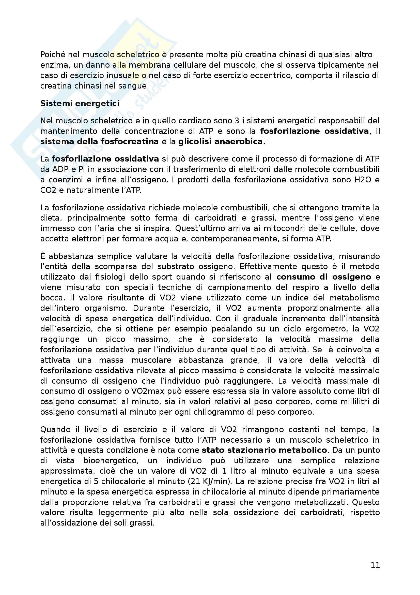 Riassunto esame Biochimica dell'esercizio fisico, prof Piccoli Pag. 11