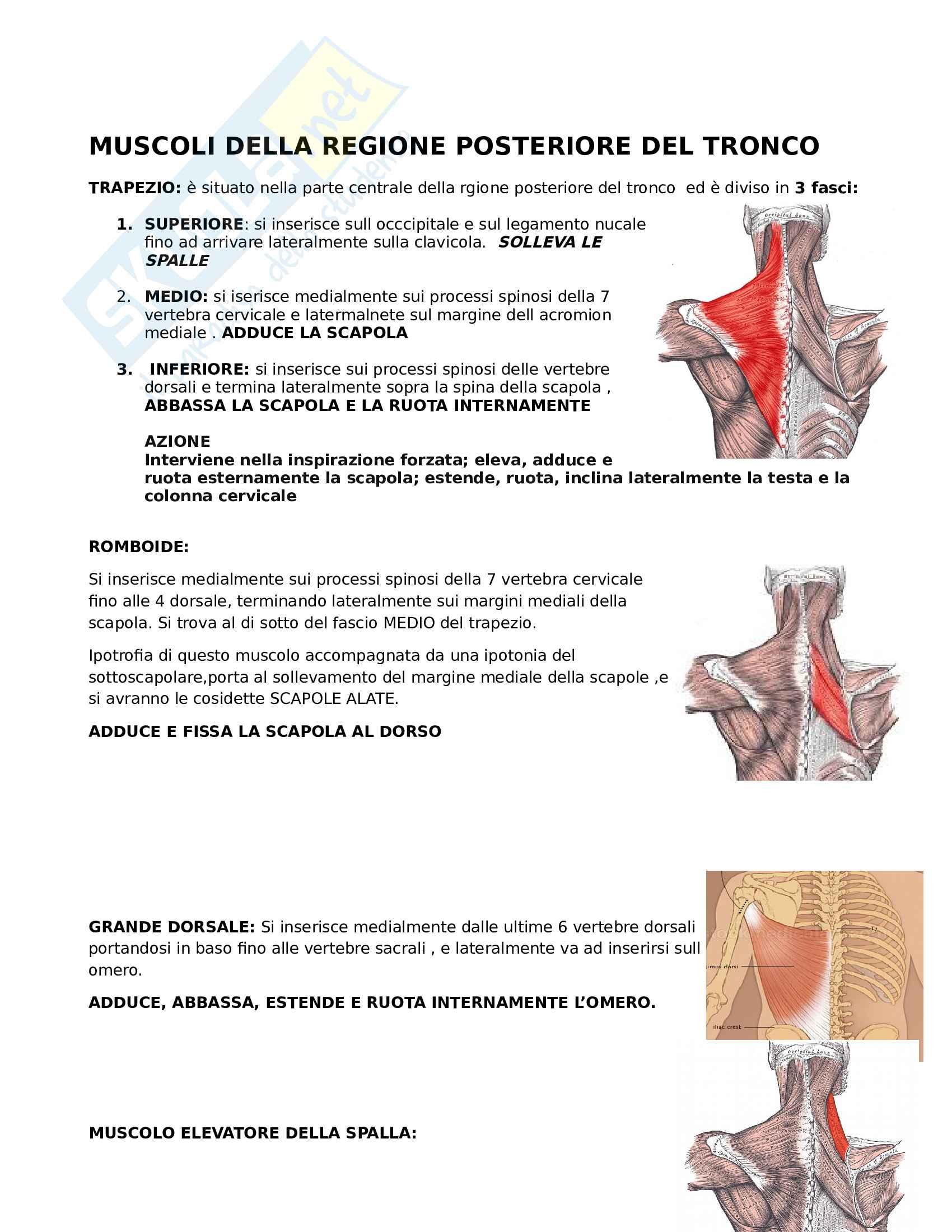 Muscoli - Origini e inserzioni con relative immagini