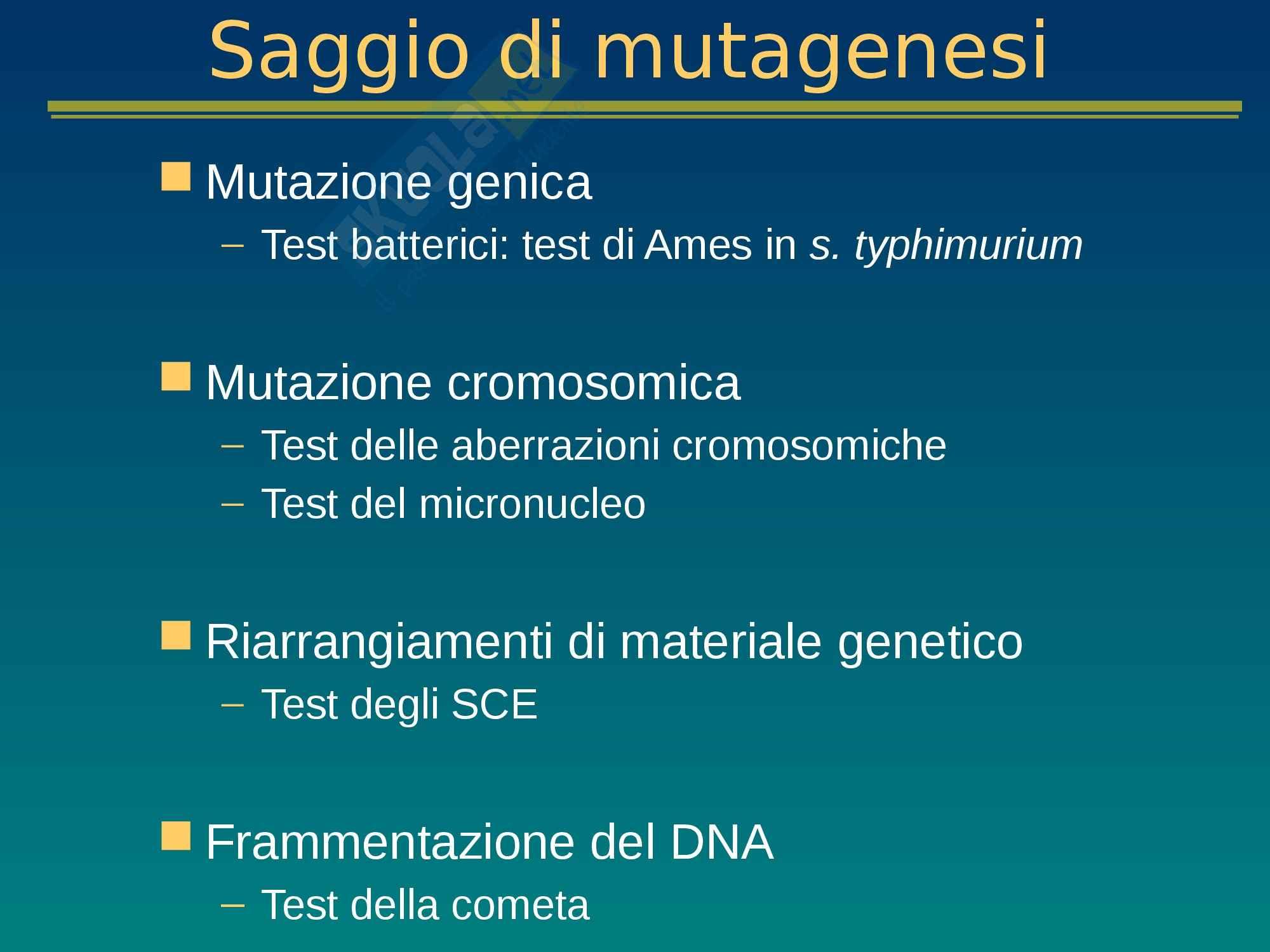 Tossicologia e mutagenesi ambientale - Appunti Lezione 14 Pag. 11