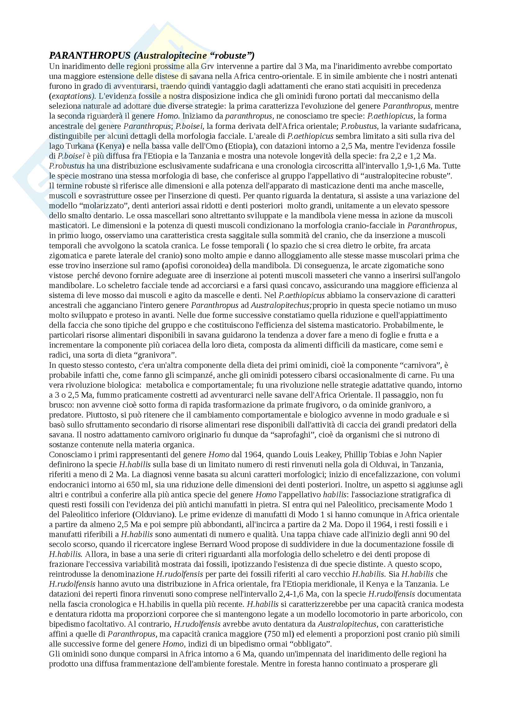 Paleantropologia Parantropitecine e genere Homo