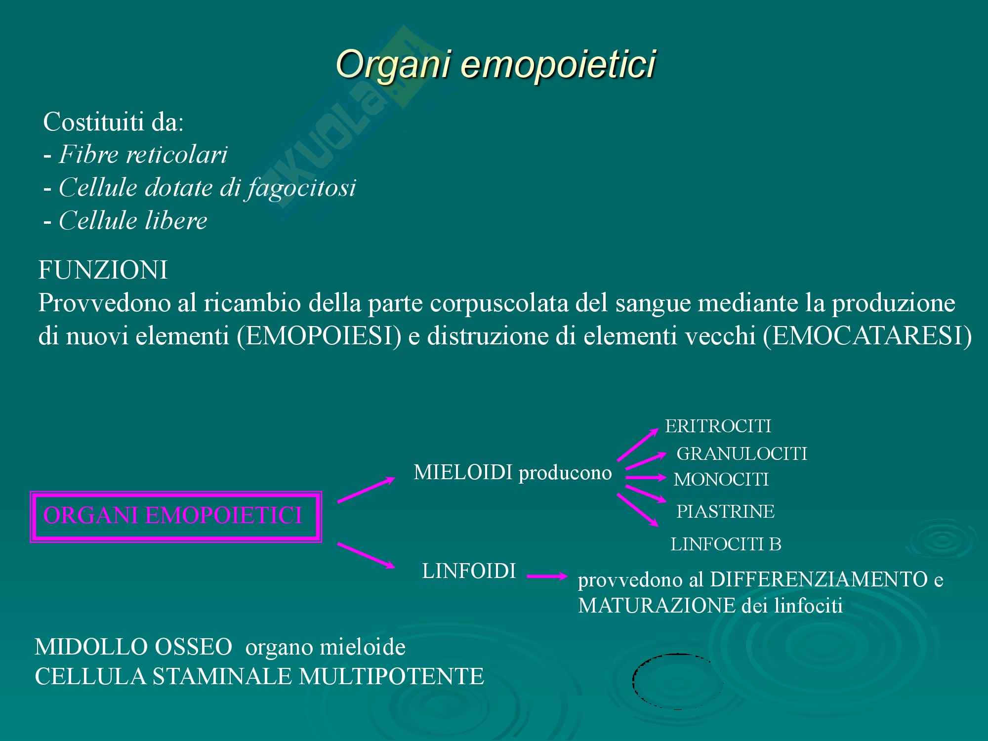 Organi Emopoietici