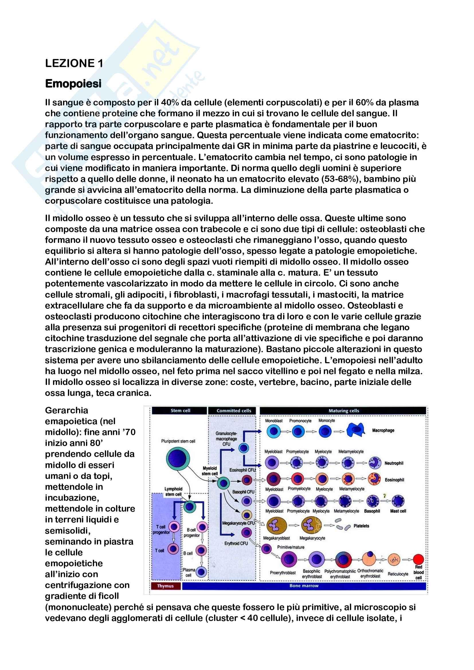 Lezioni di immunoematologia prof.ssa Santini