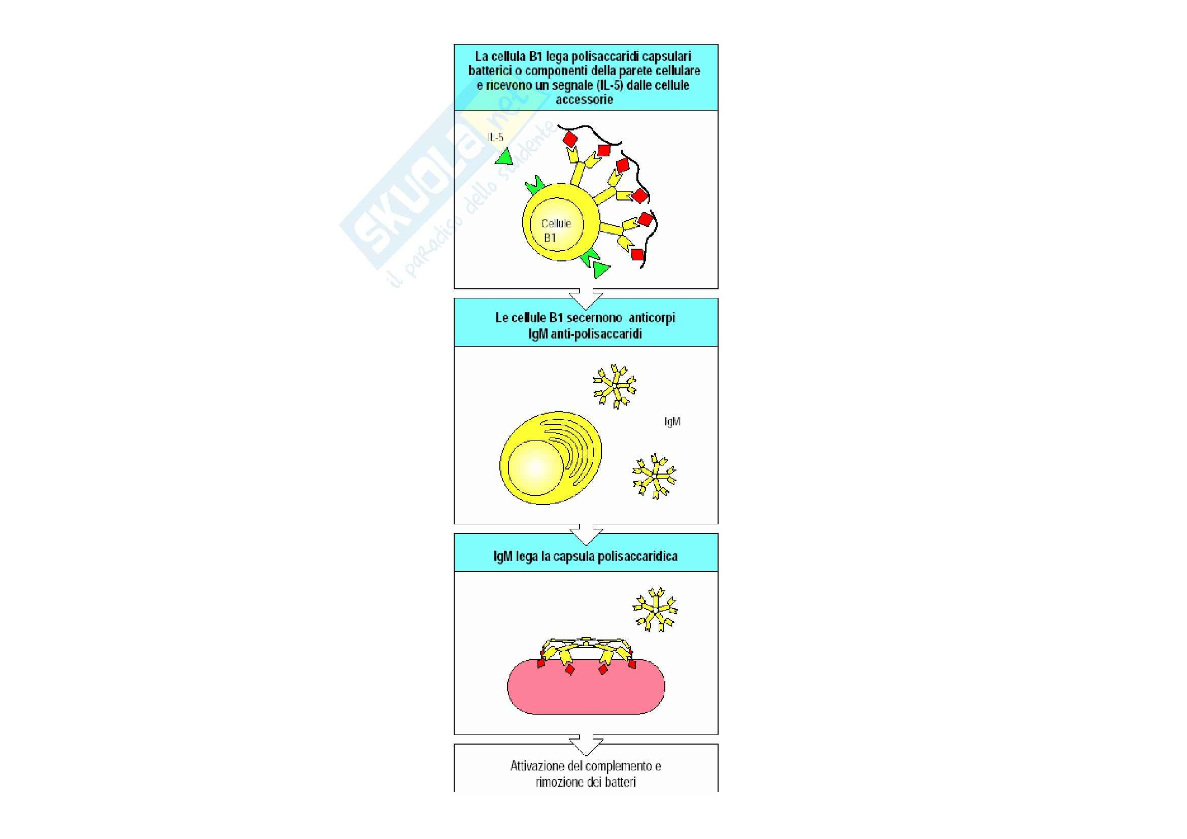 Immunologia - cellule NK Pag. 16