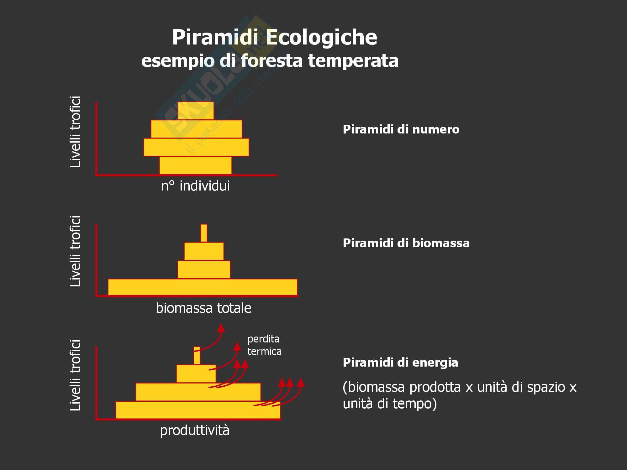 Ecologia: Piramidi ecologiche, efficienze, produzione primaria e secondaria Pag. 6