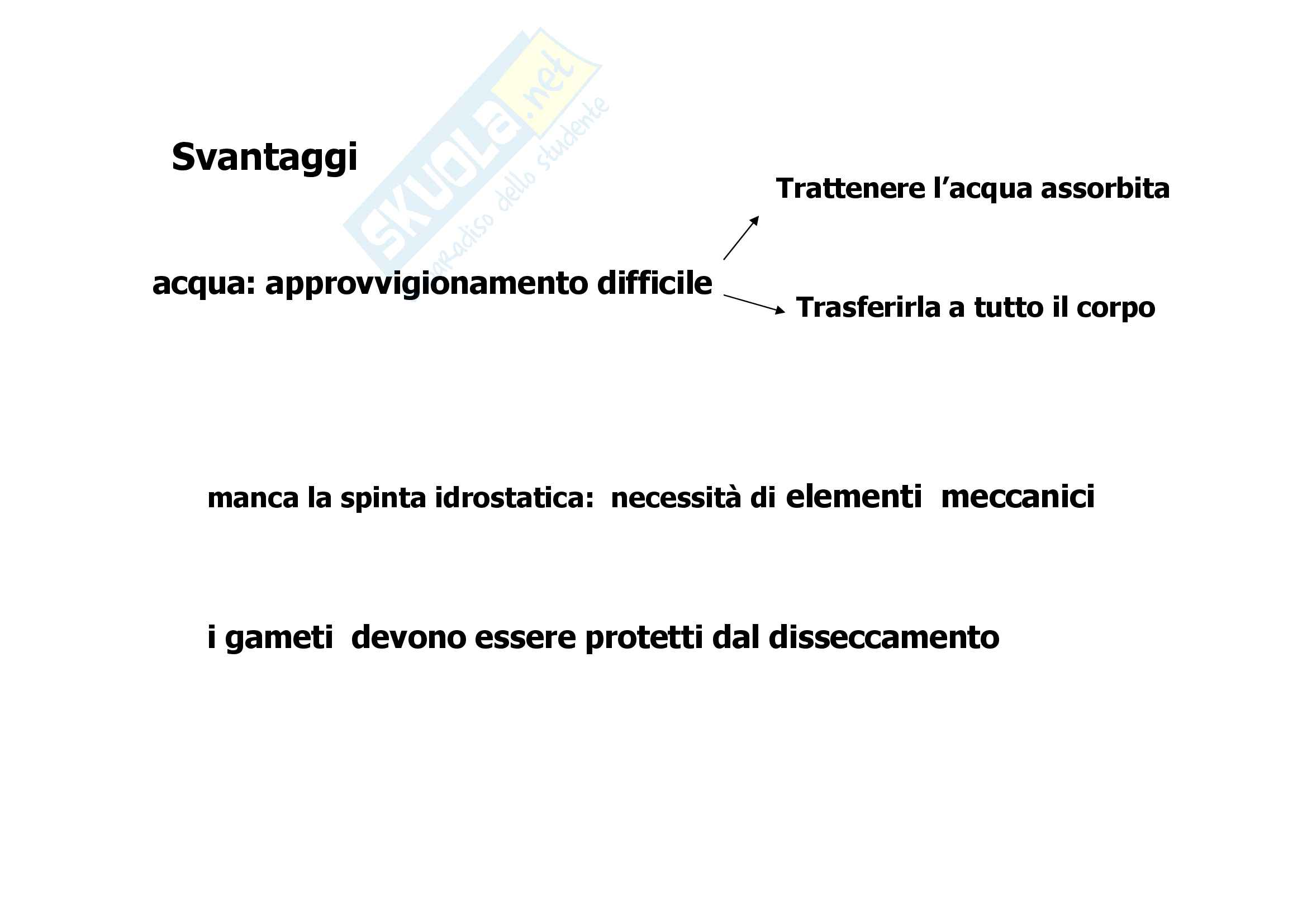 Tessuti 1° parte Pag. 2
