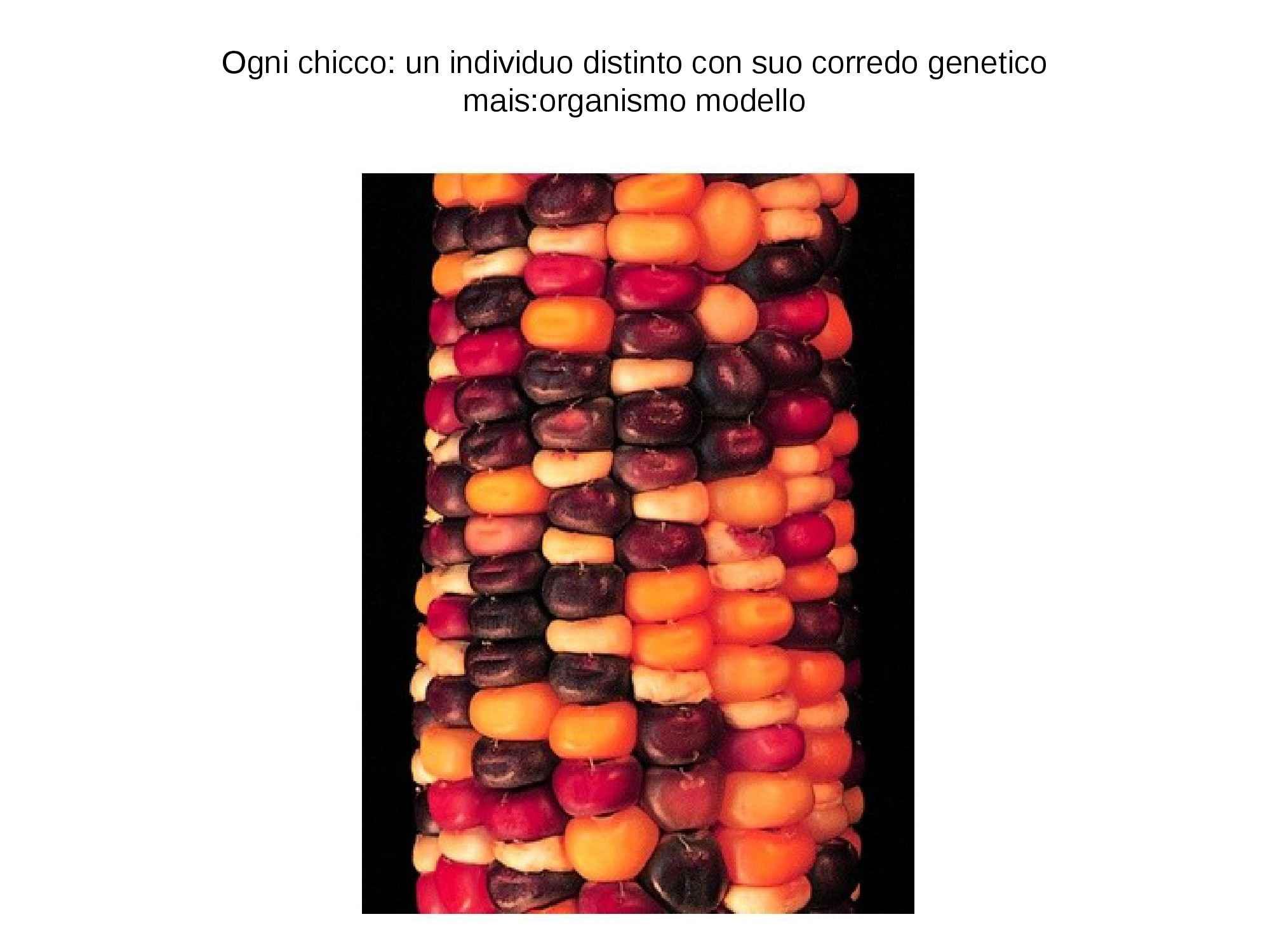 Polimorfismo e variabilità genetica