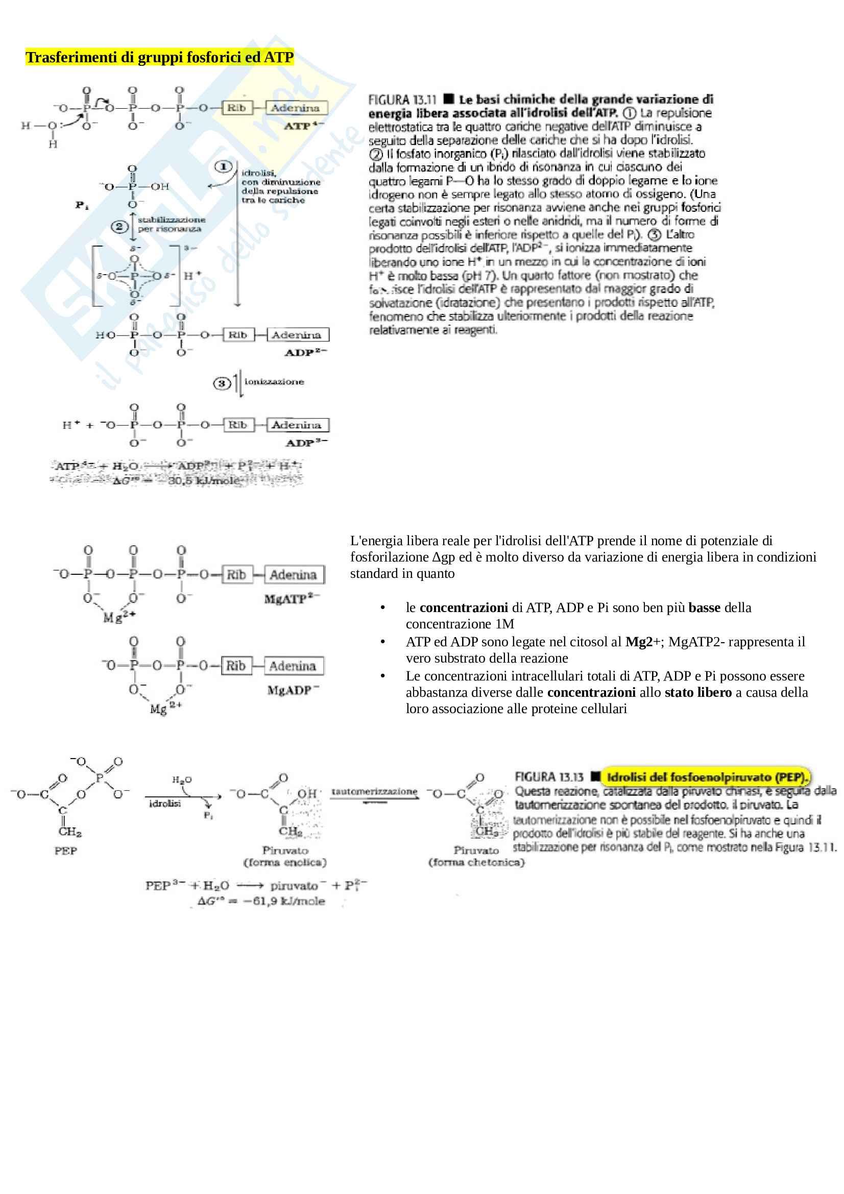 """Appunti biochimica umana, testo di riferimento """"Principi di biochimica di Lehninger"""" Pag. 31"""