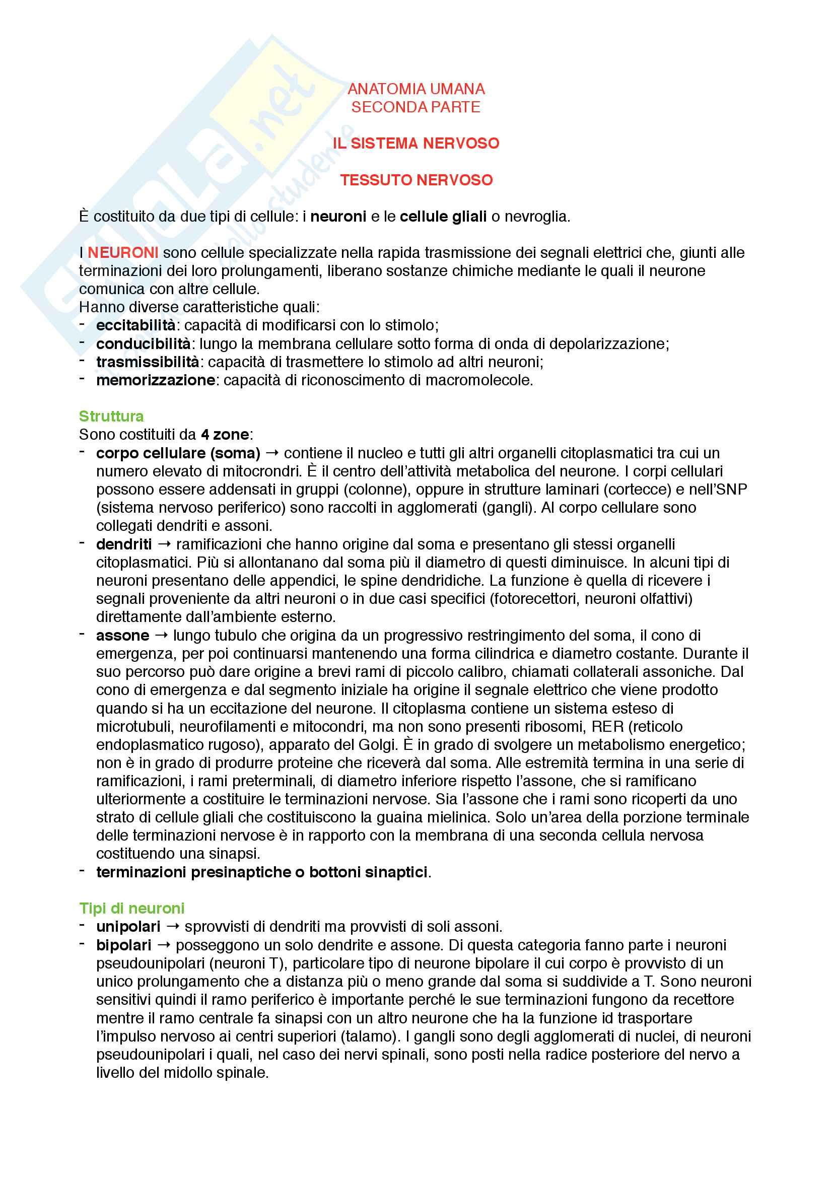 appunto E. Falcieri Anatomia