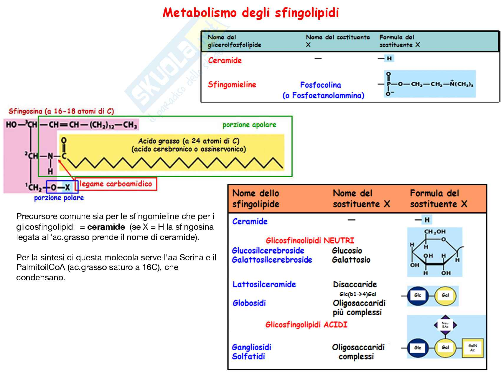 Metabolismo dei lipidi di membrana: Appunti di biochimica