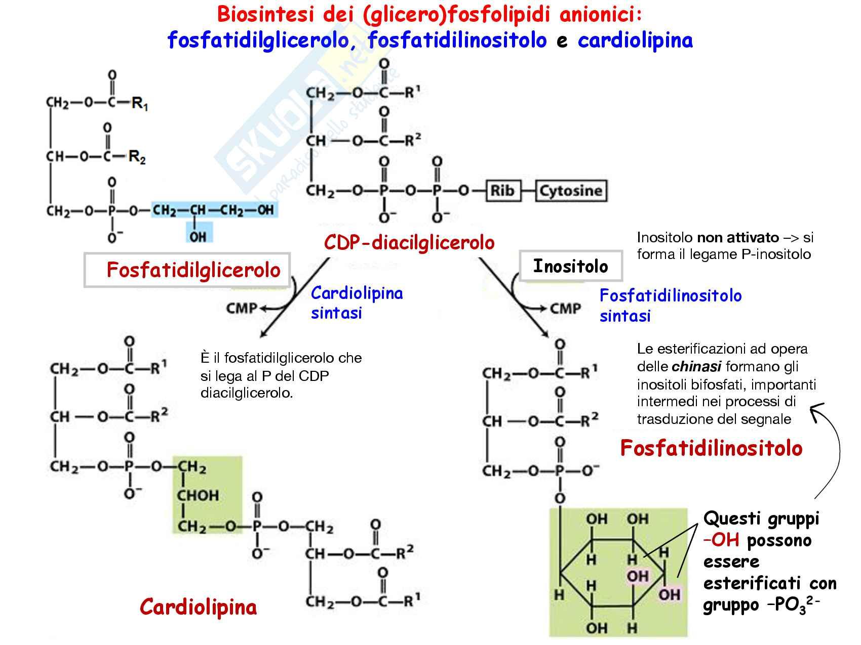 14 Metabolismo dei lipidi di membrana Pag. 6