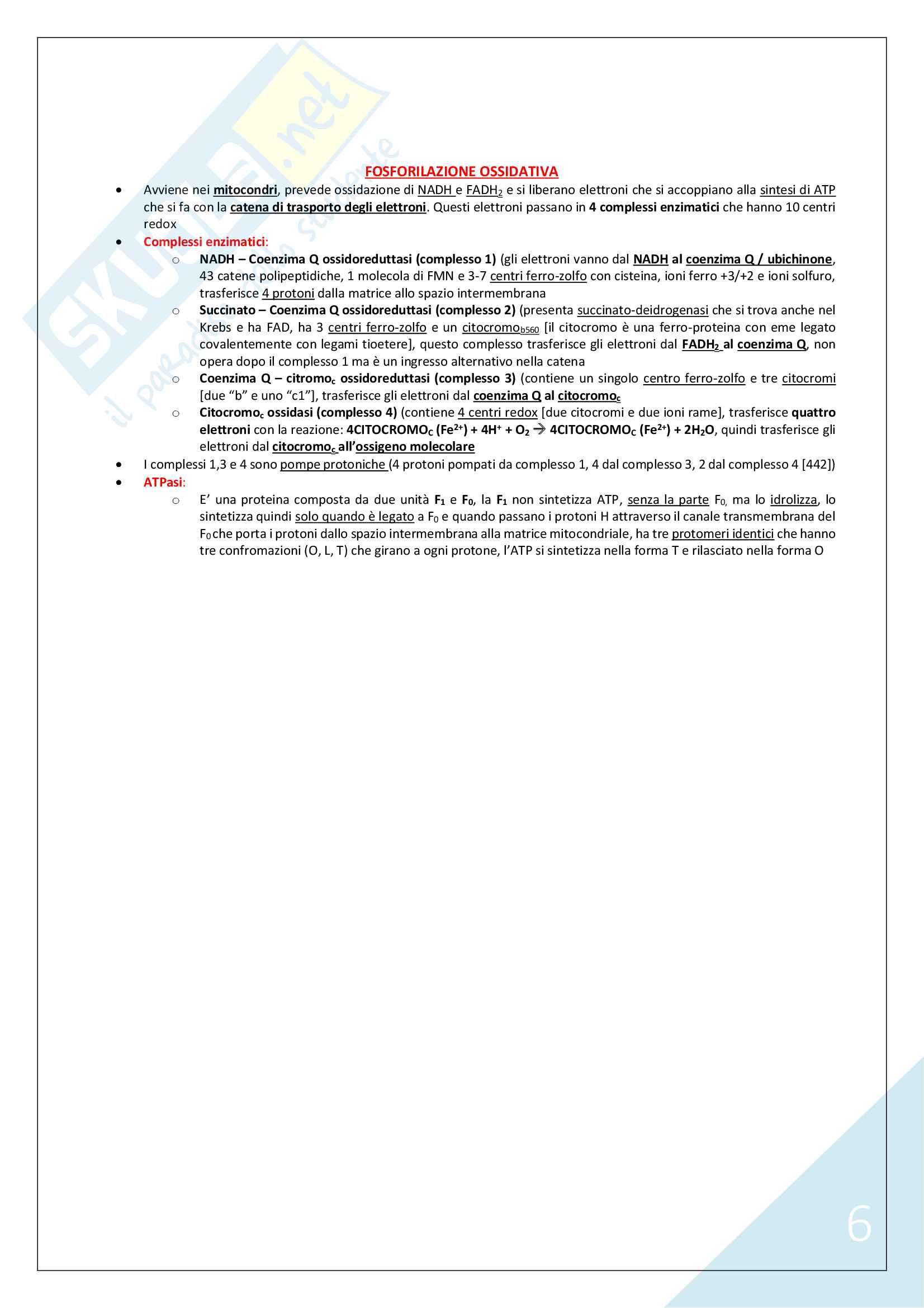 Biochimica Umana - 1° Anno Scienze Motorie (Reazioni ed Enzimi) Pag. 6