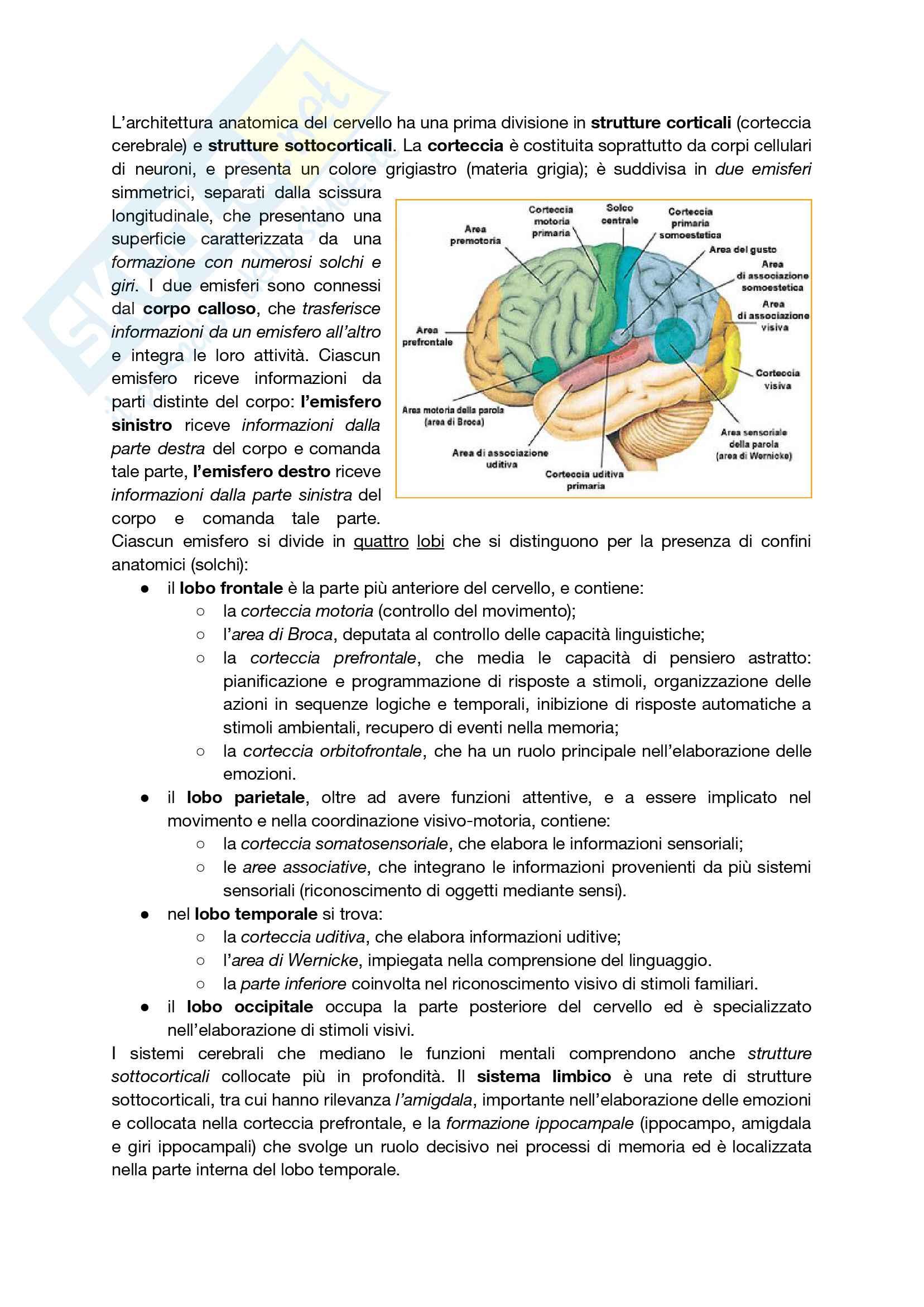 Riassunto esame Psicologia Cognitiva e della Percezione, prof. Brancati, libro consigliato Design. Percezione visiva e cognizione, psicologia dell'arte, la scelta del prodotto: emozioni, decisioni e neuroestetica, Giannini, Marzi Pag. 2