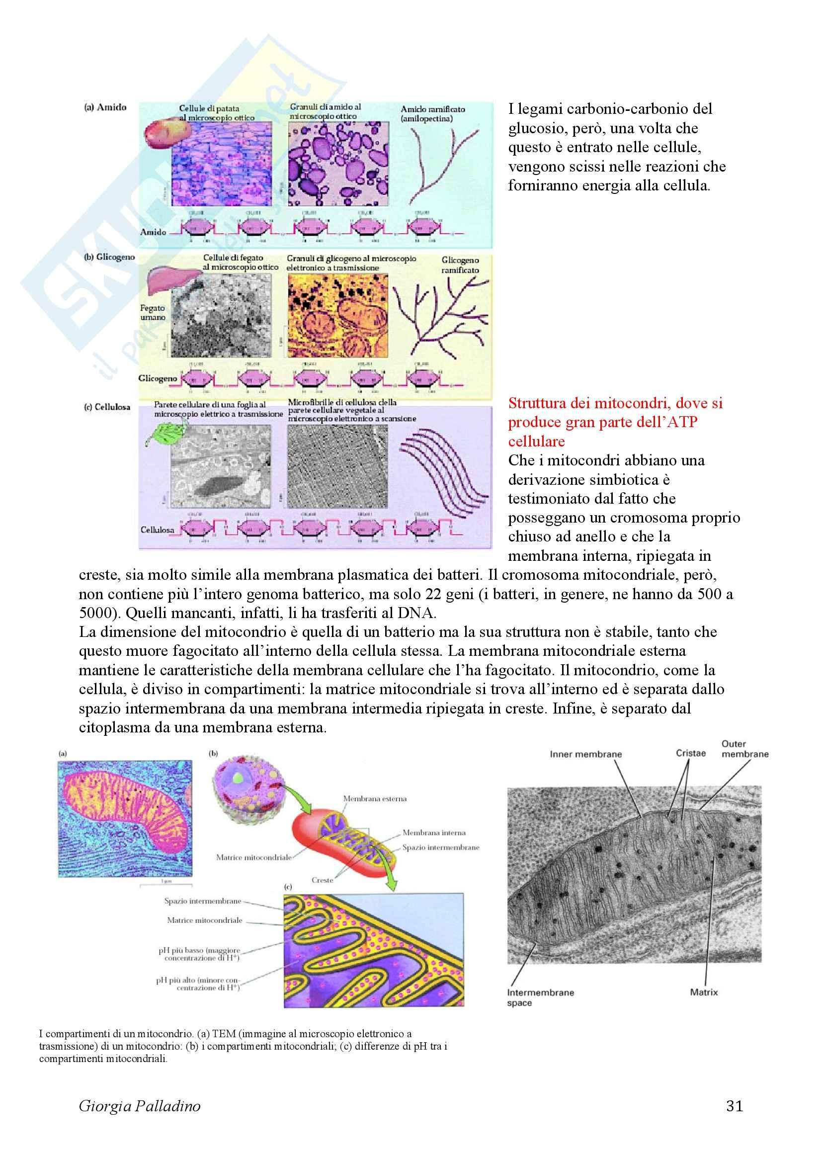 Biologia Cellulare Pag. 31