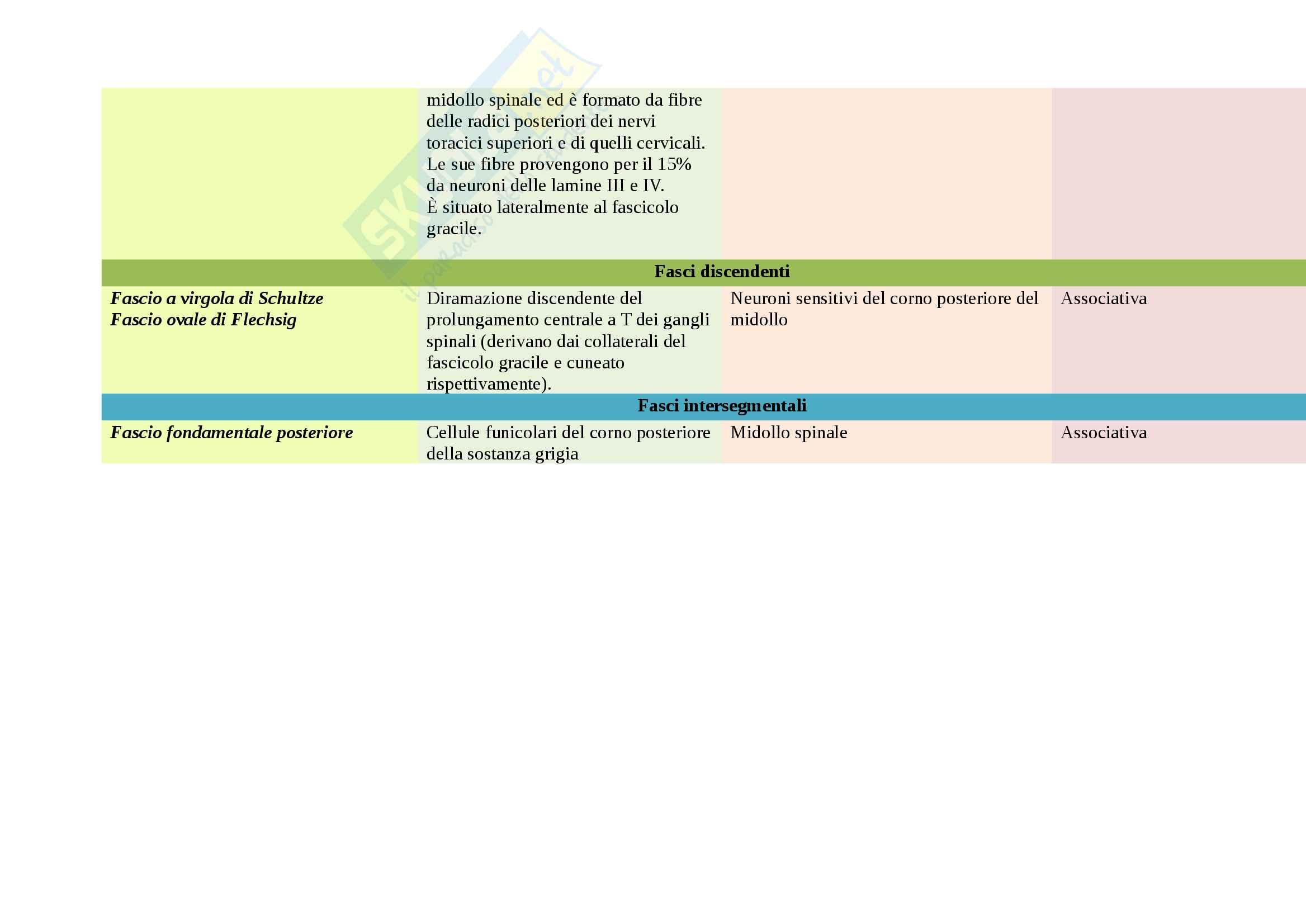 Fasci del midollo spinale Pag. 6