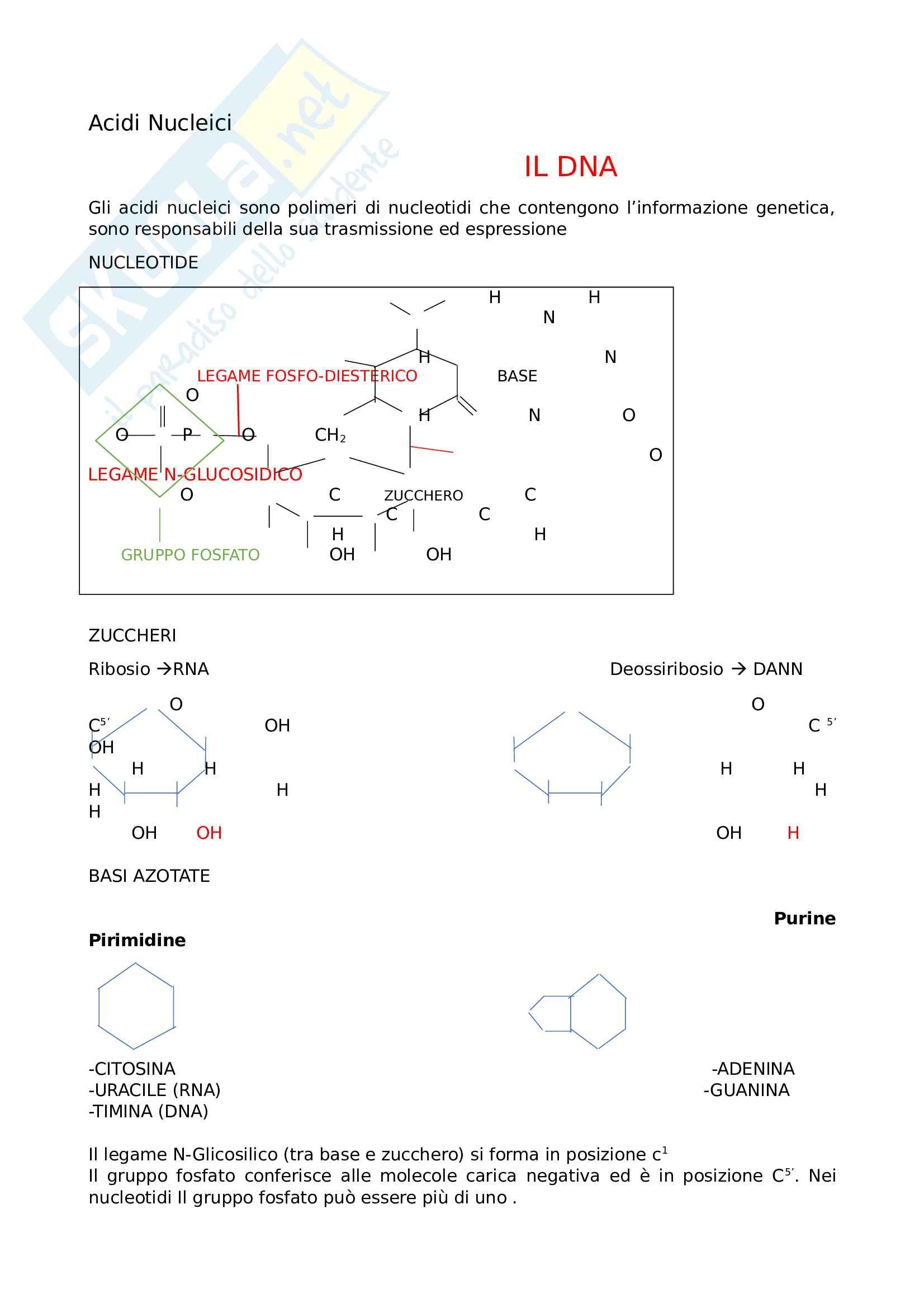 Appunti biologia cellulare - Acidi nucleici