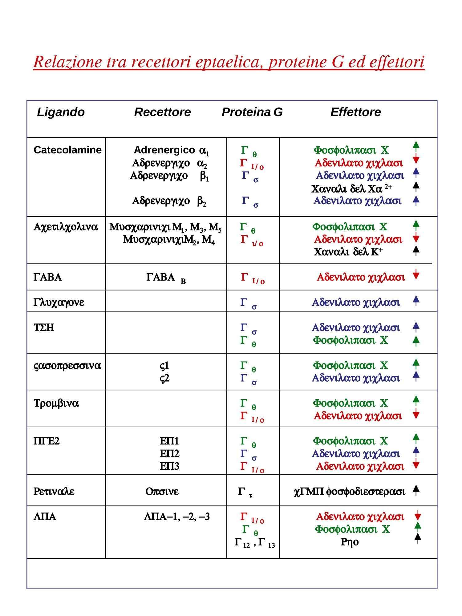 Fosfolipasi C beta