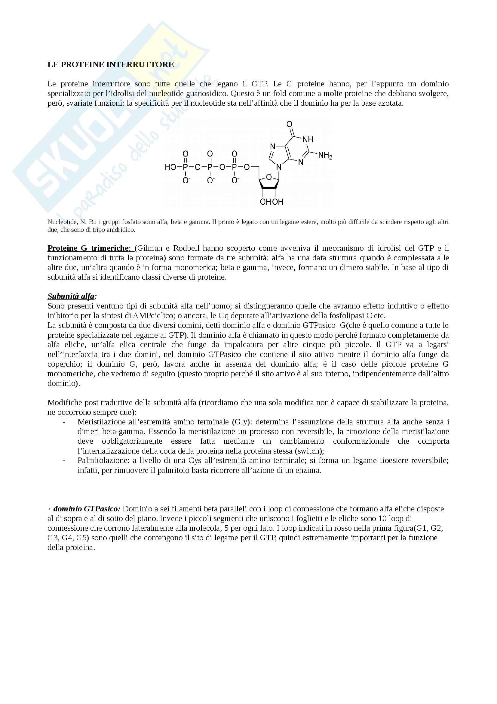 Struttura e funzione delle proteine G