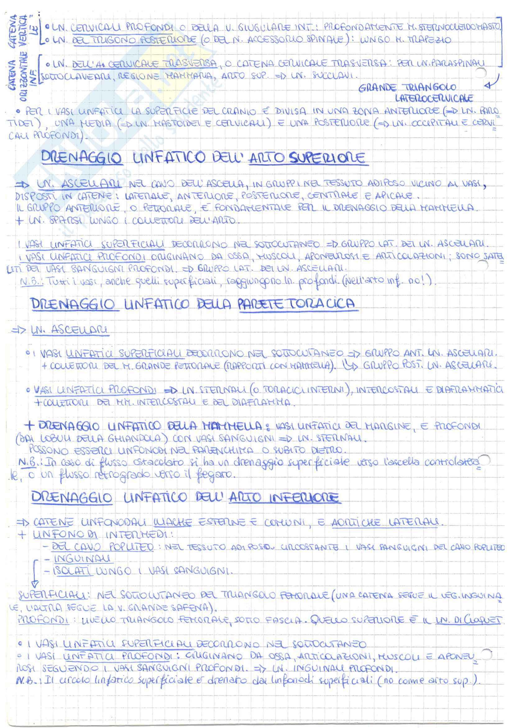 Riassunto esame Anatomia Umana, prof. Onori, libro consigliato Anastasi Pag. 26
